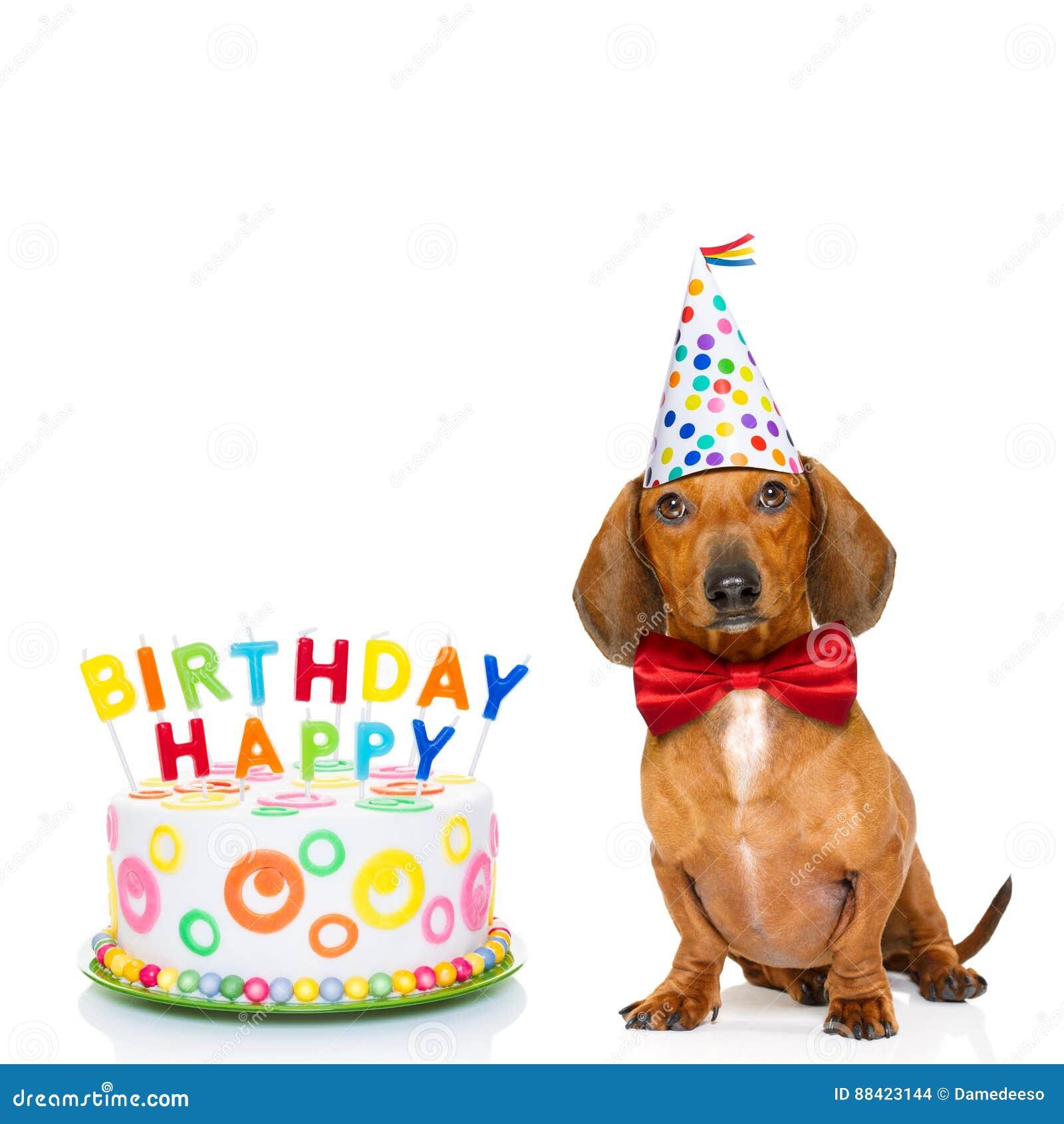 Cane Di Buon Compleanno Fotografia Stock Immagine Di Dachshund