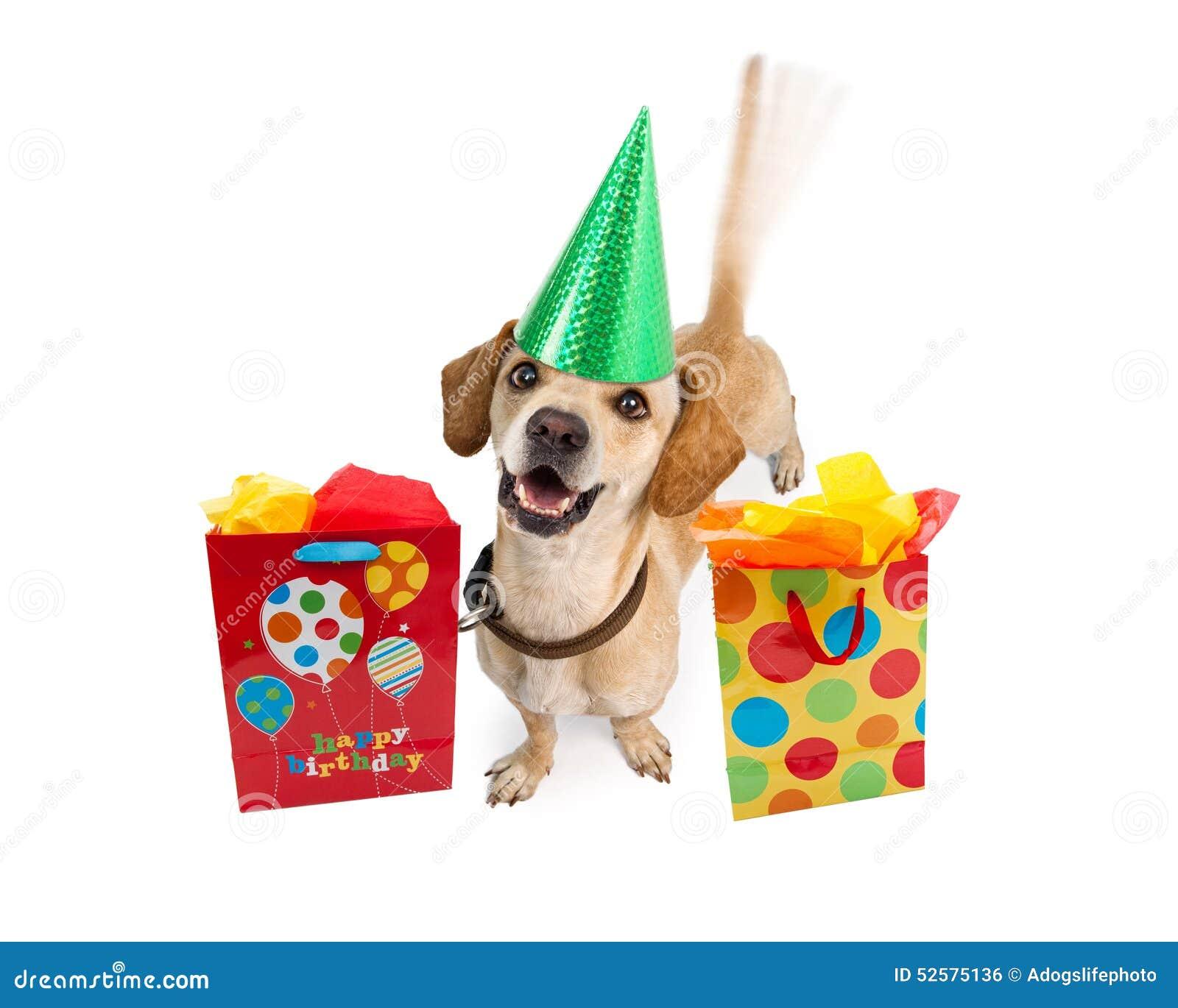 Cane Di Buon Compleanno Con Le Borse Del Regalo Fotografia Stock