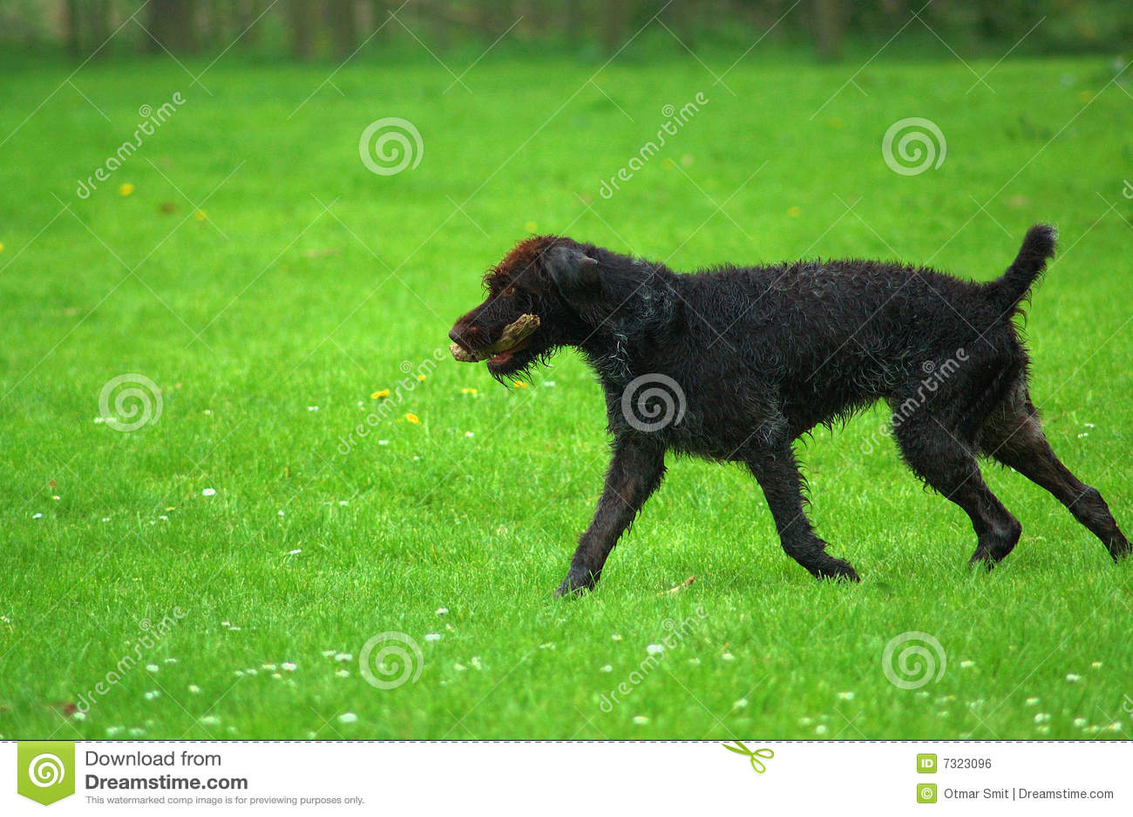 Cane di caccia