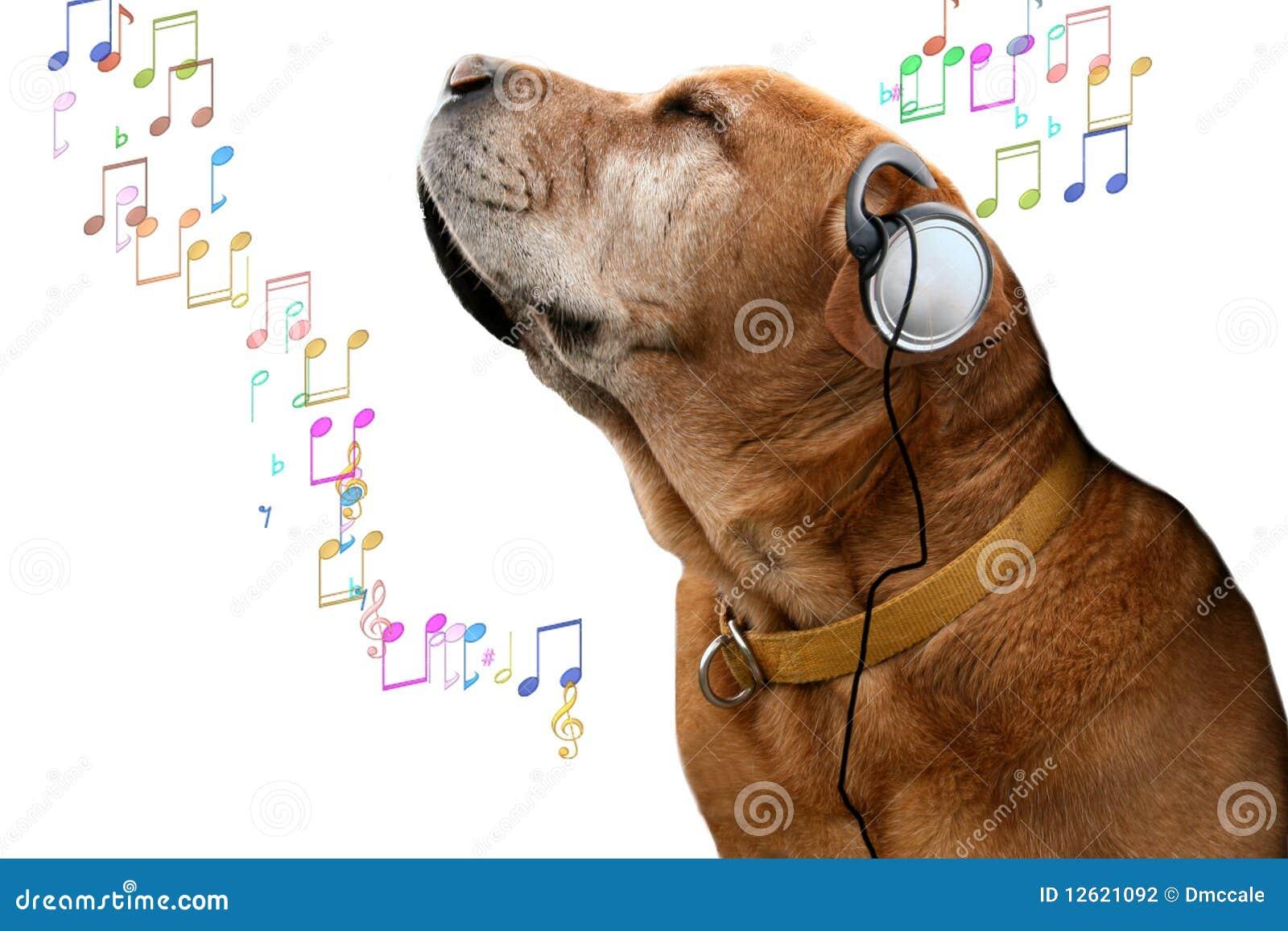 Cane di musica