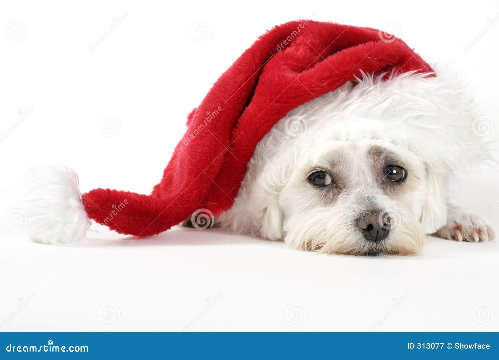 Cane di natale immagine stock immagine di gioia animali for Animali a natale