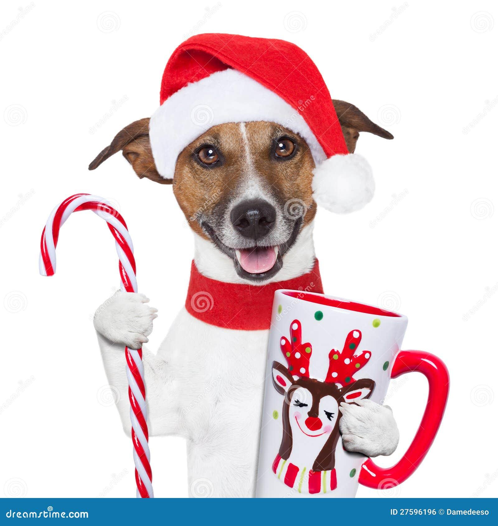 Cane di natale con la canna di caramella e della tazza