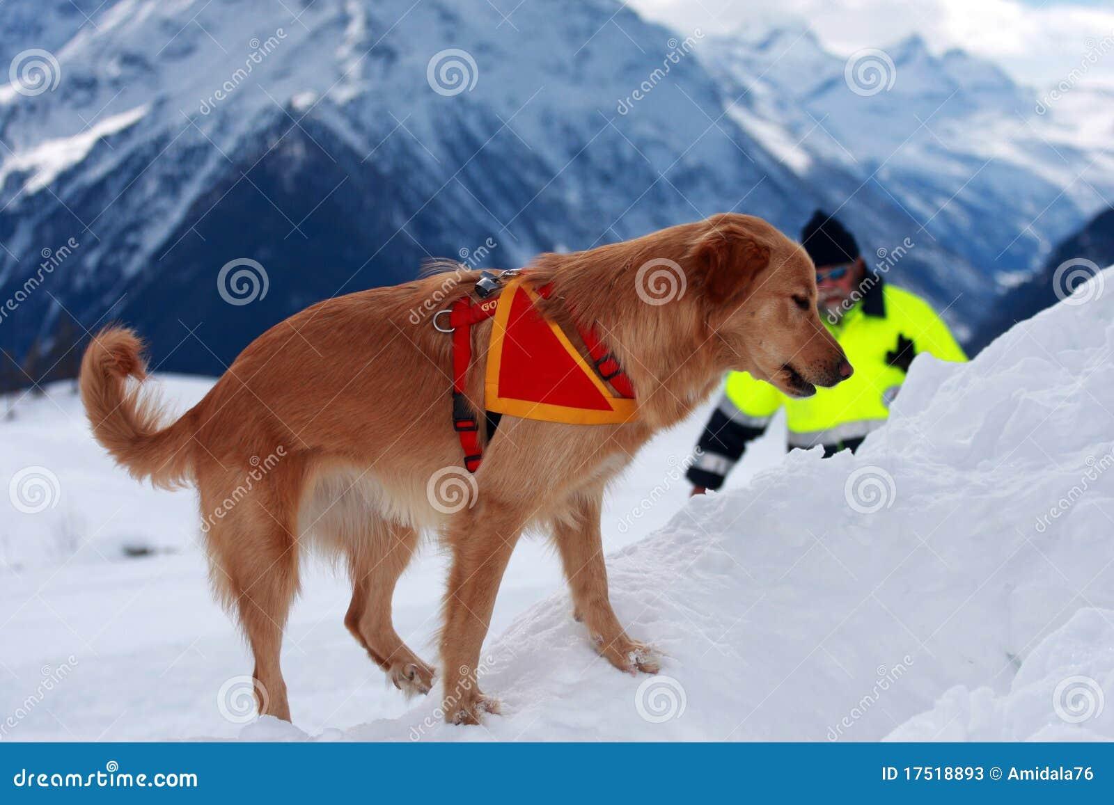 Cane di salvataggio