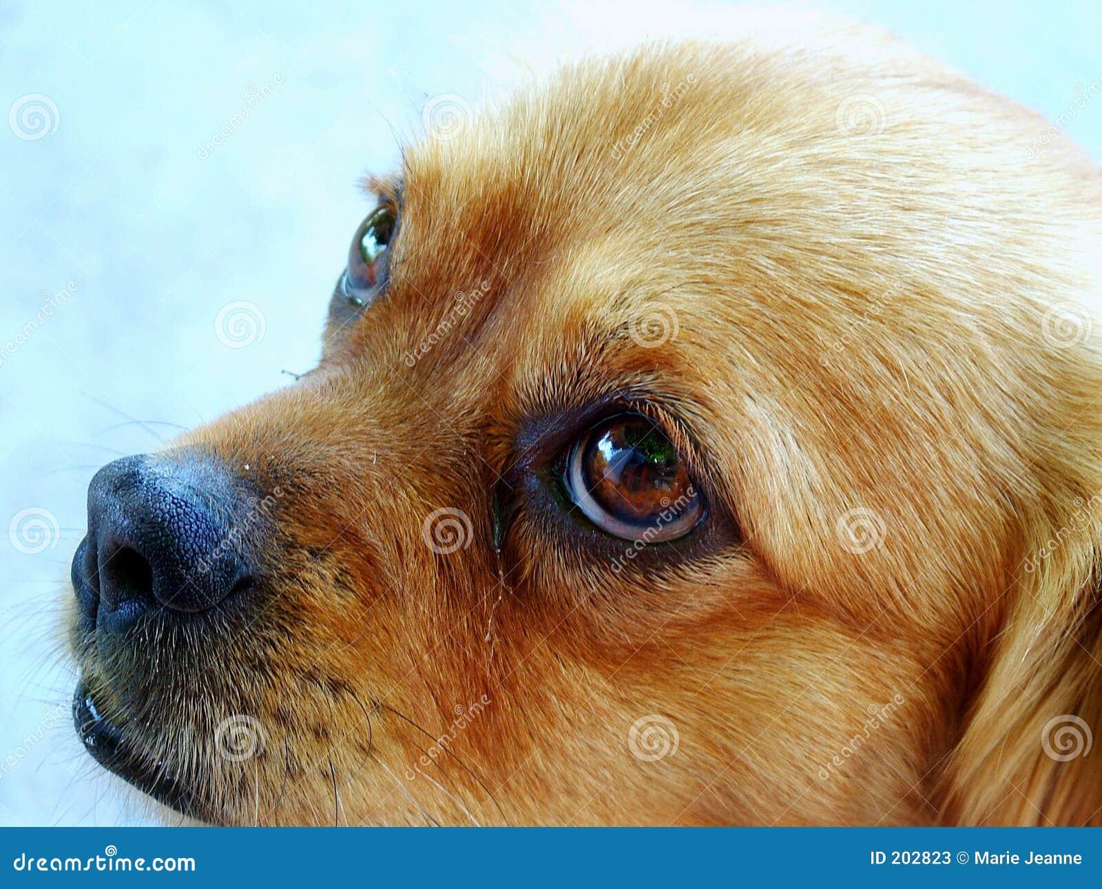 Cane di sguardo triste