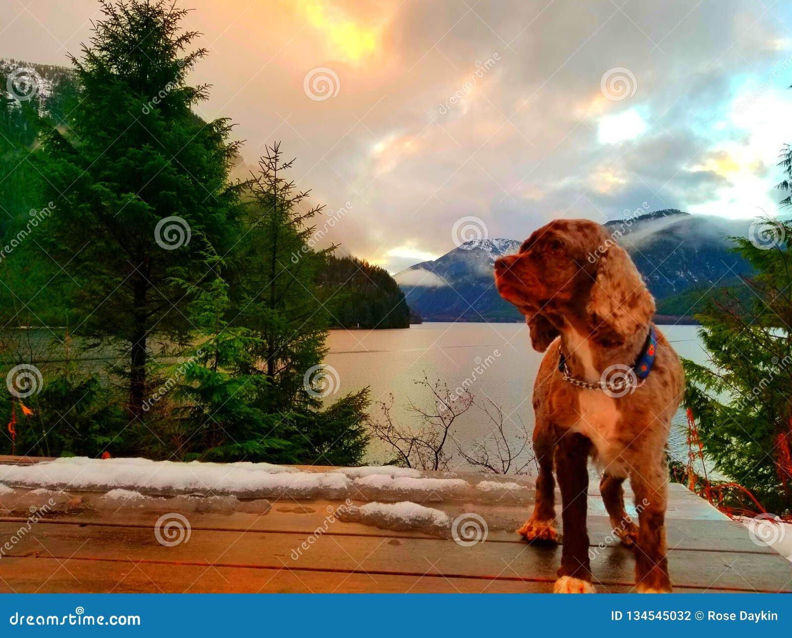 Cane di tramonto
