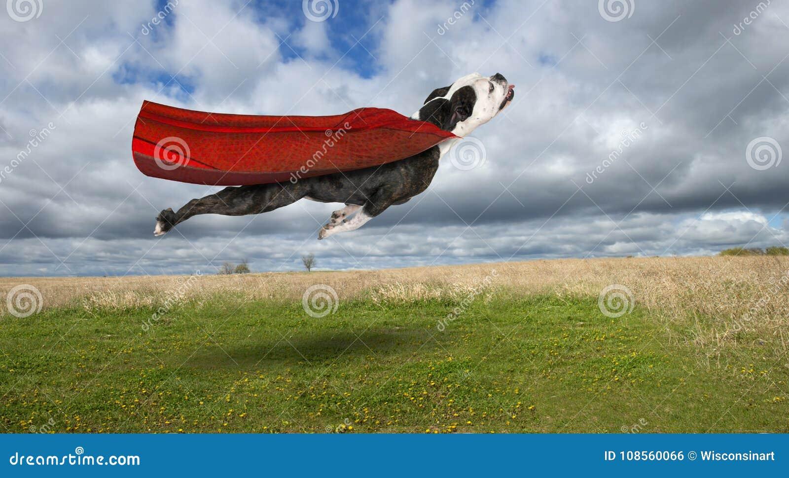 Cane divertente del supereroe, bulldog volante