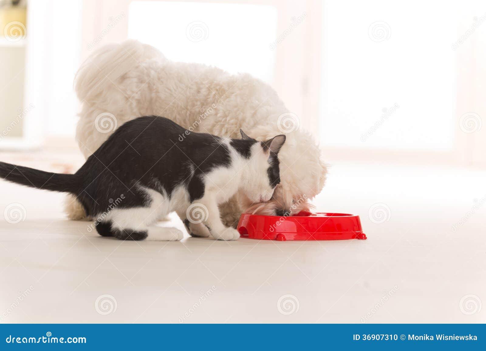 Cane e gatto che mangiano alimento da una ciotola
