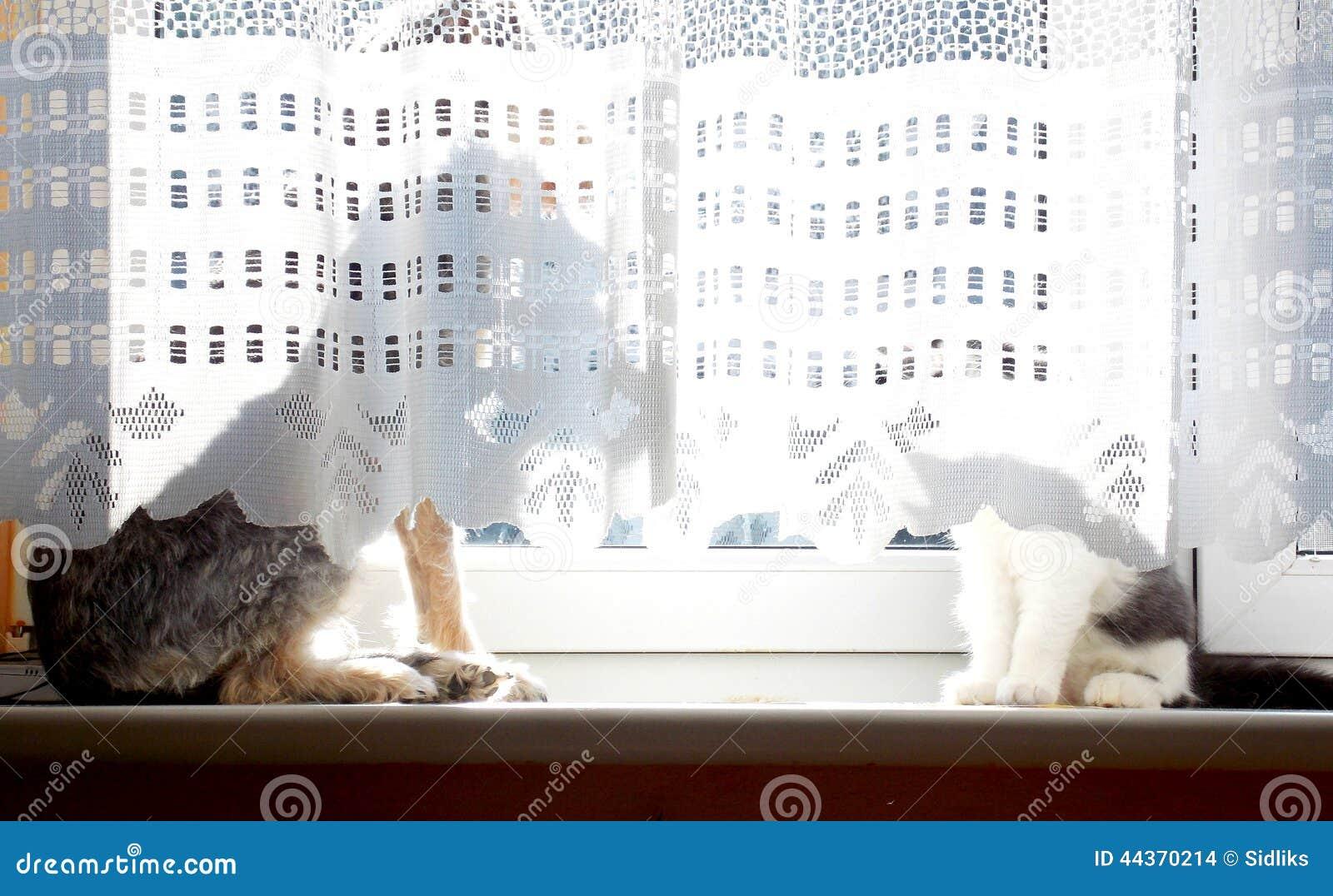 Cane e gatto dietro la tenda