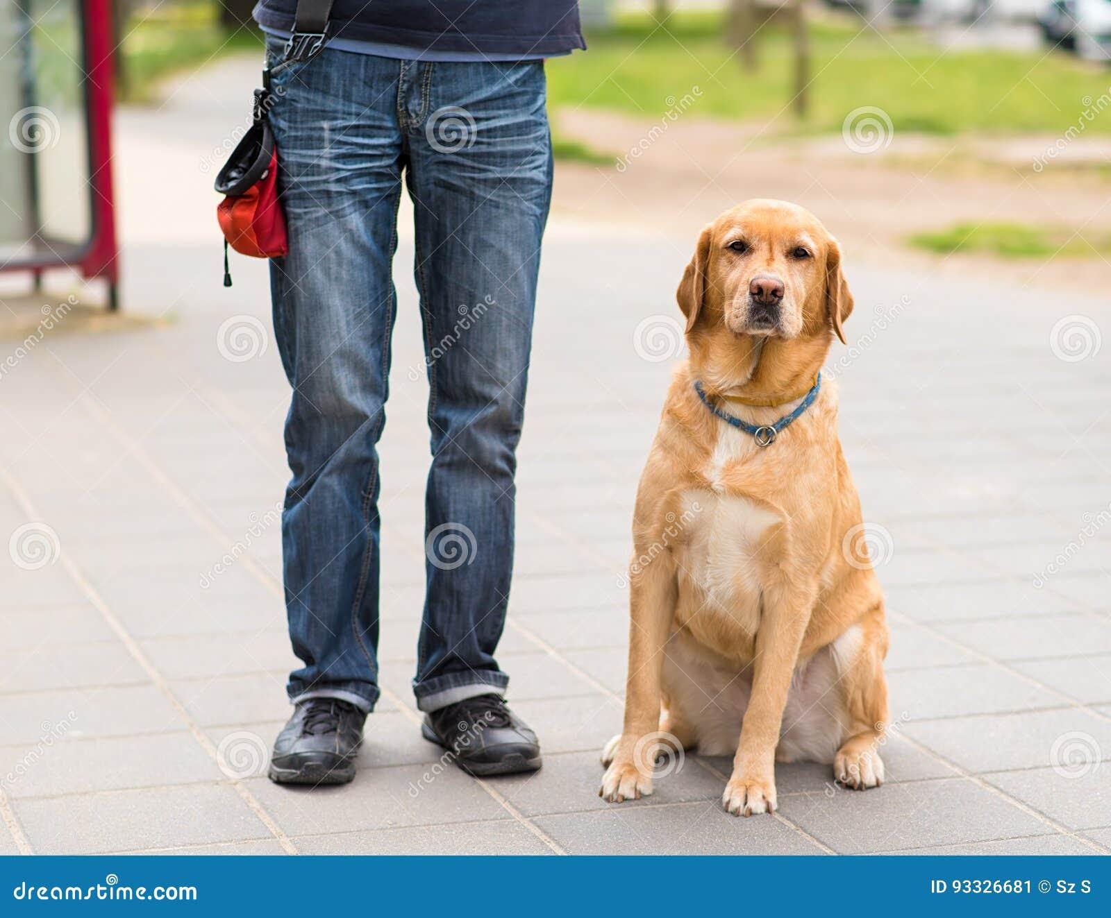 Cane E Proprietario Di Labrador Nella Città Immagine Stock