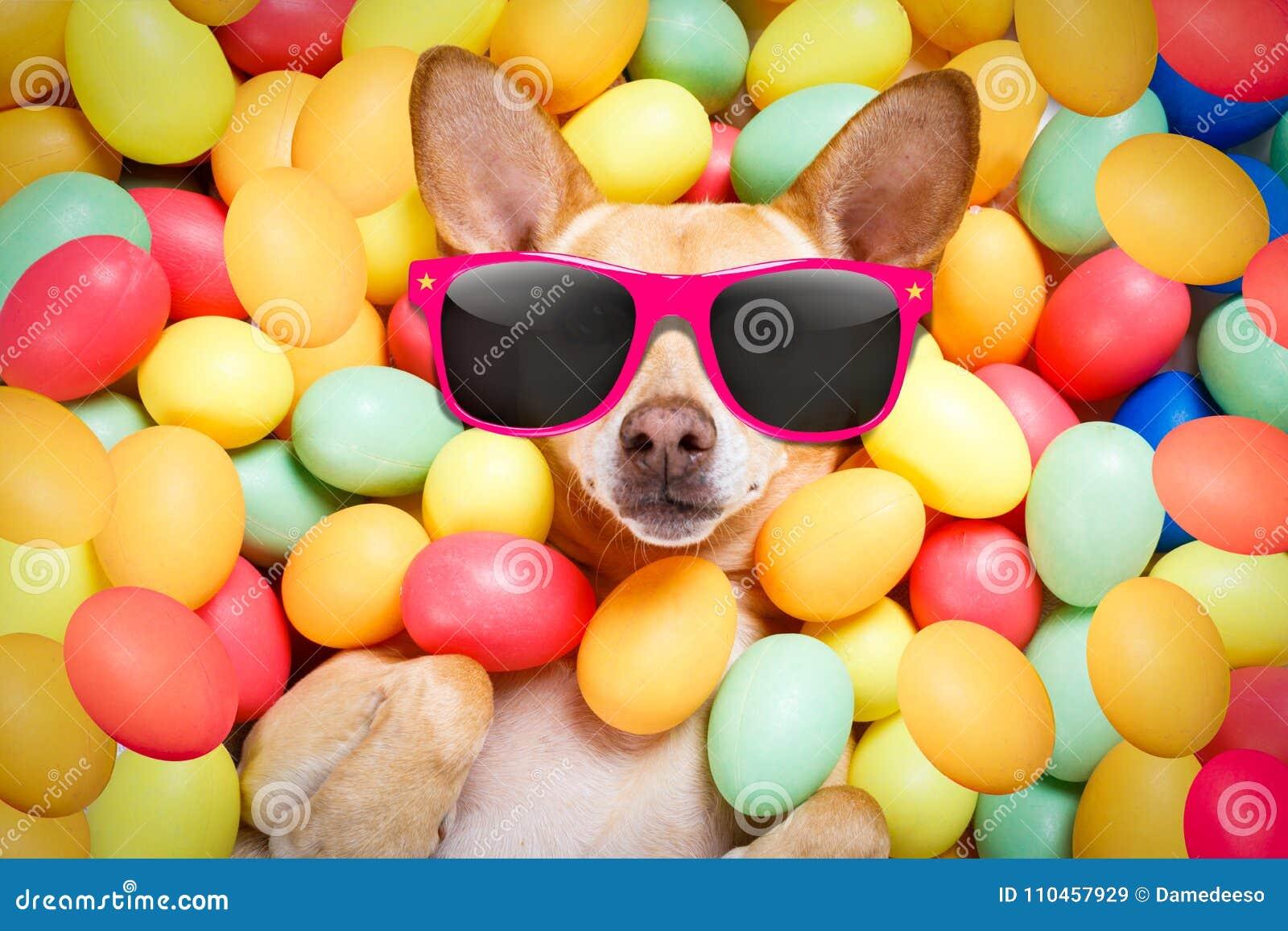 Cane felice di pasqua con le uova