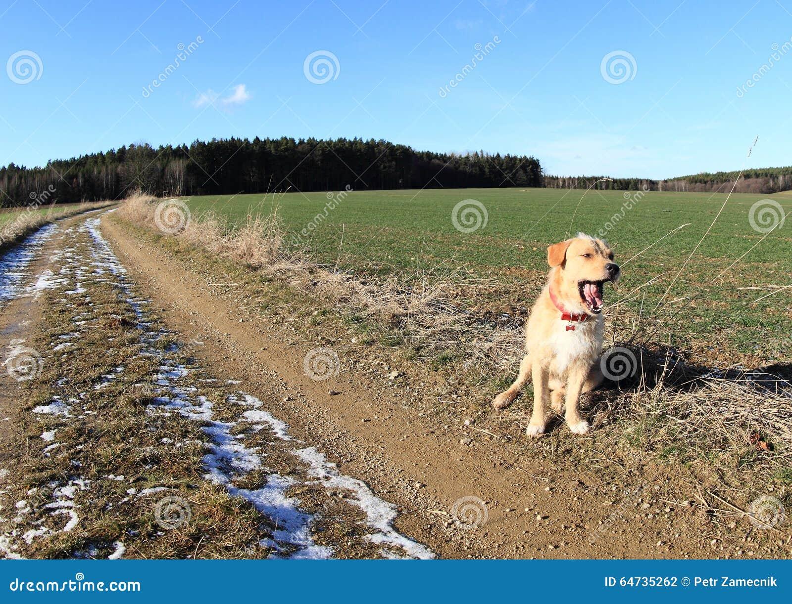 Cane leggero di sbadiglio