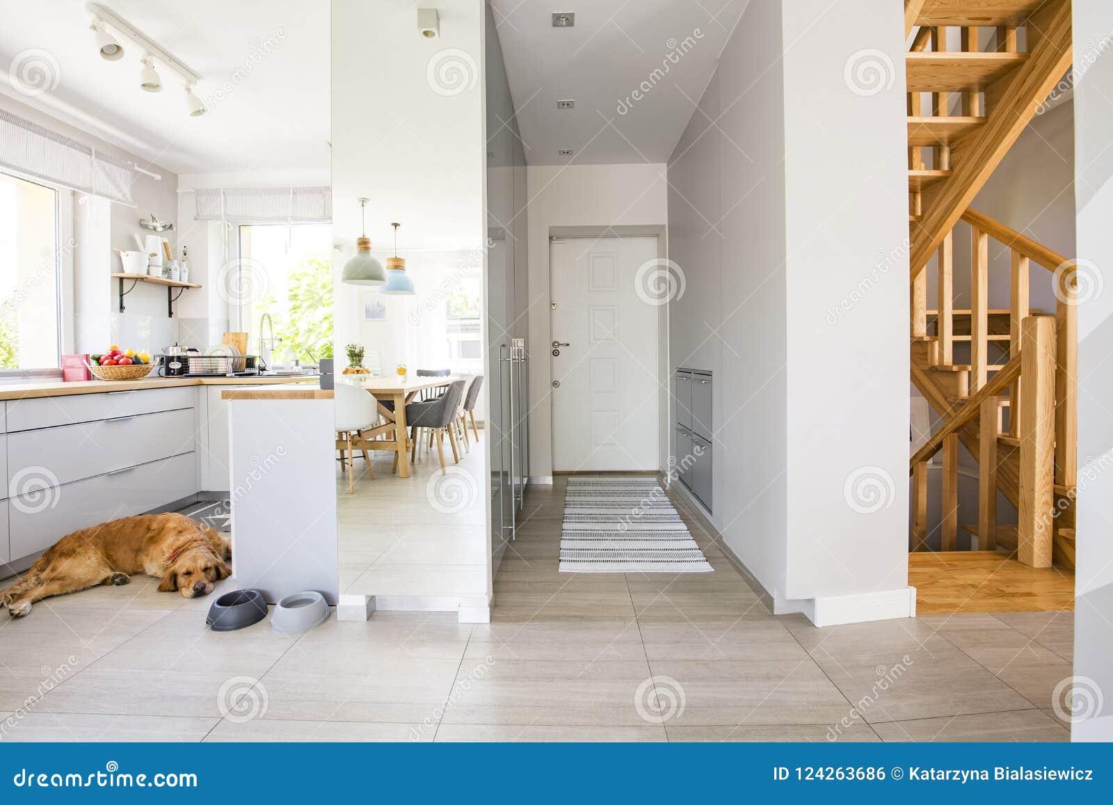 Cane nella cucina con le finestre ed il tappeto nell interno del corridoio della h