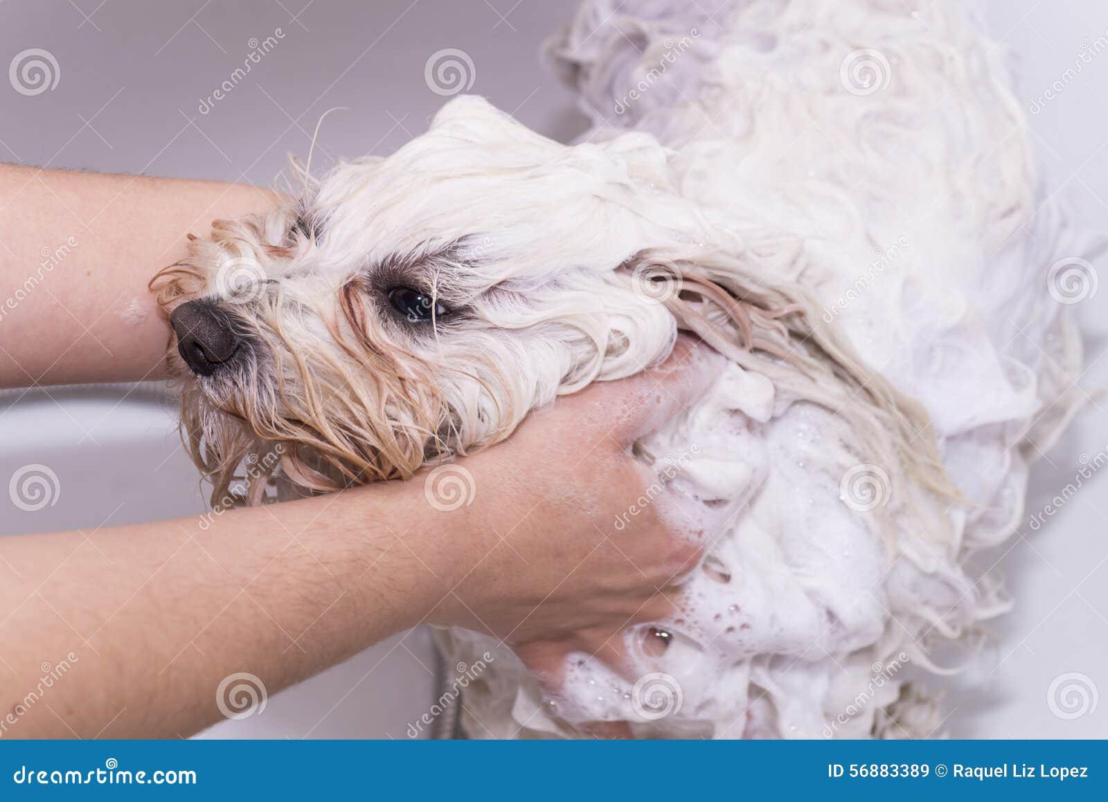 Cane nella doccia