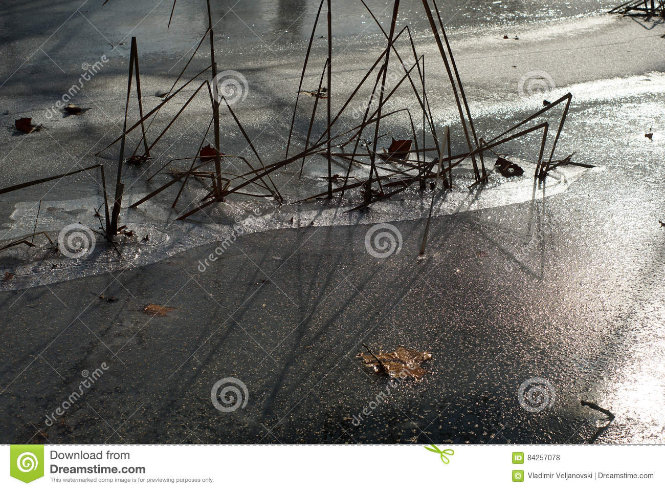 Download Cane over frozen lakes stock photo. Image of white, outdoors - 84257078