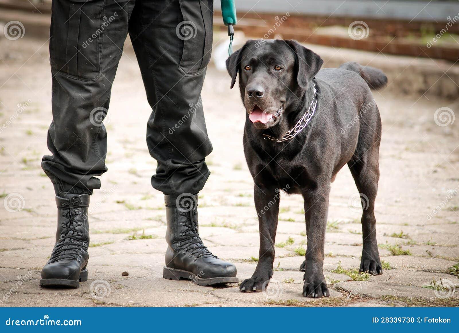 Cane Poliziotto Fotografia Stock Immagine Di Laboratorio 28339730