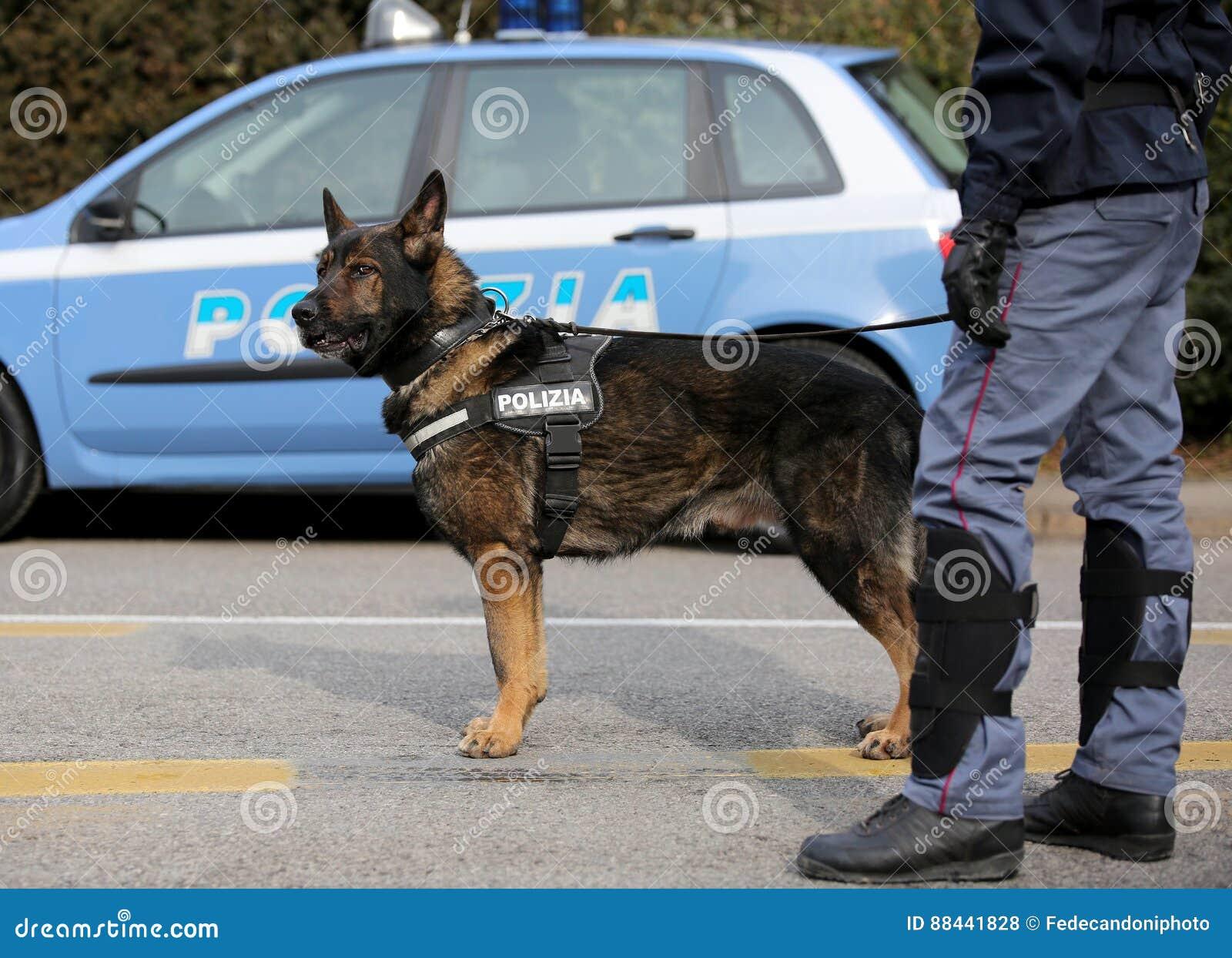Cane poliziotto italiano mentre sorvegliando le vie della città prima del