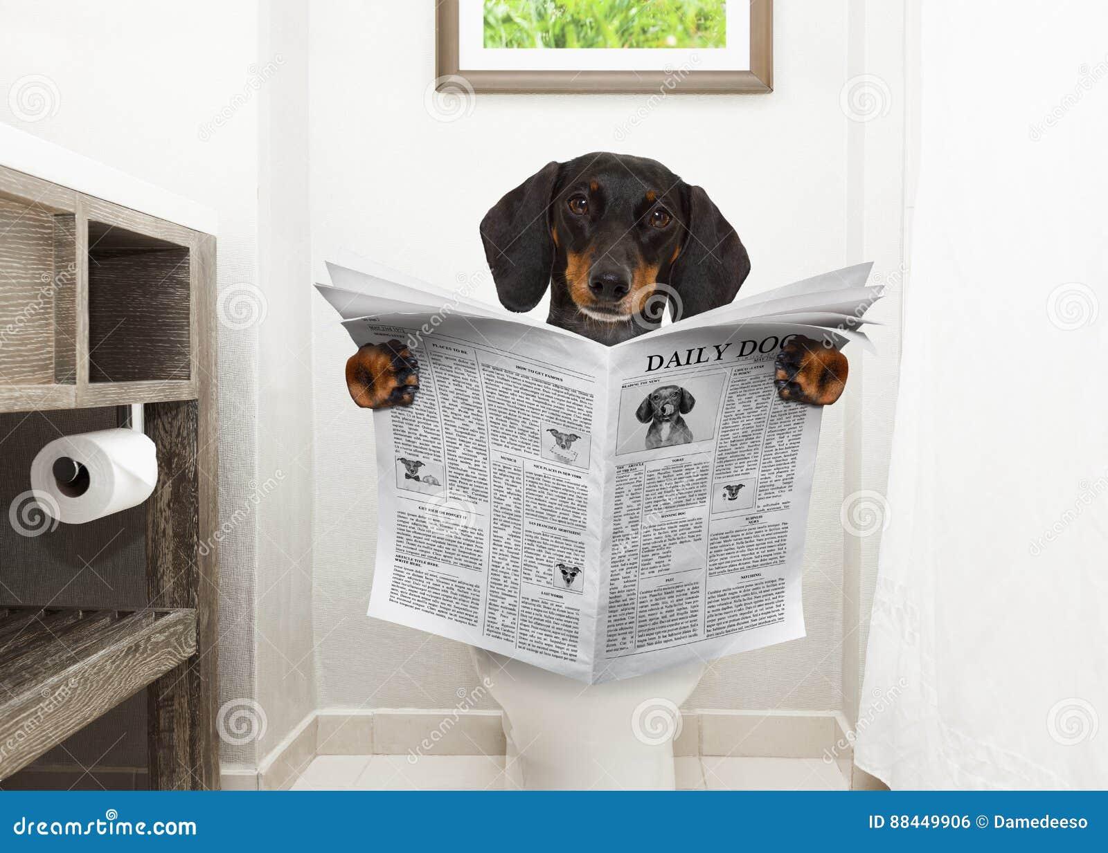 Cane Sul Giornale Della Lettura Del Sedile Di Toilette Fotografia