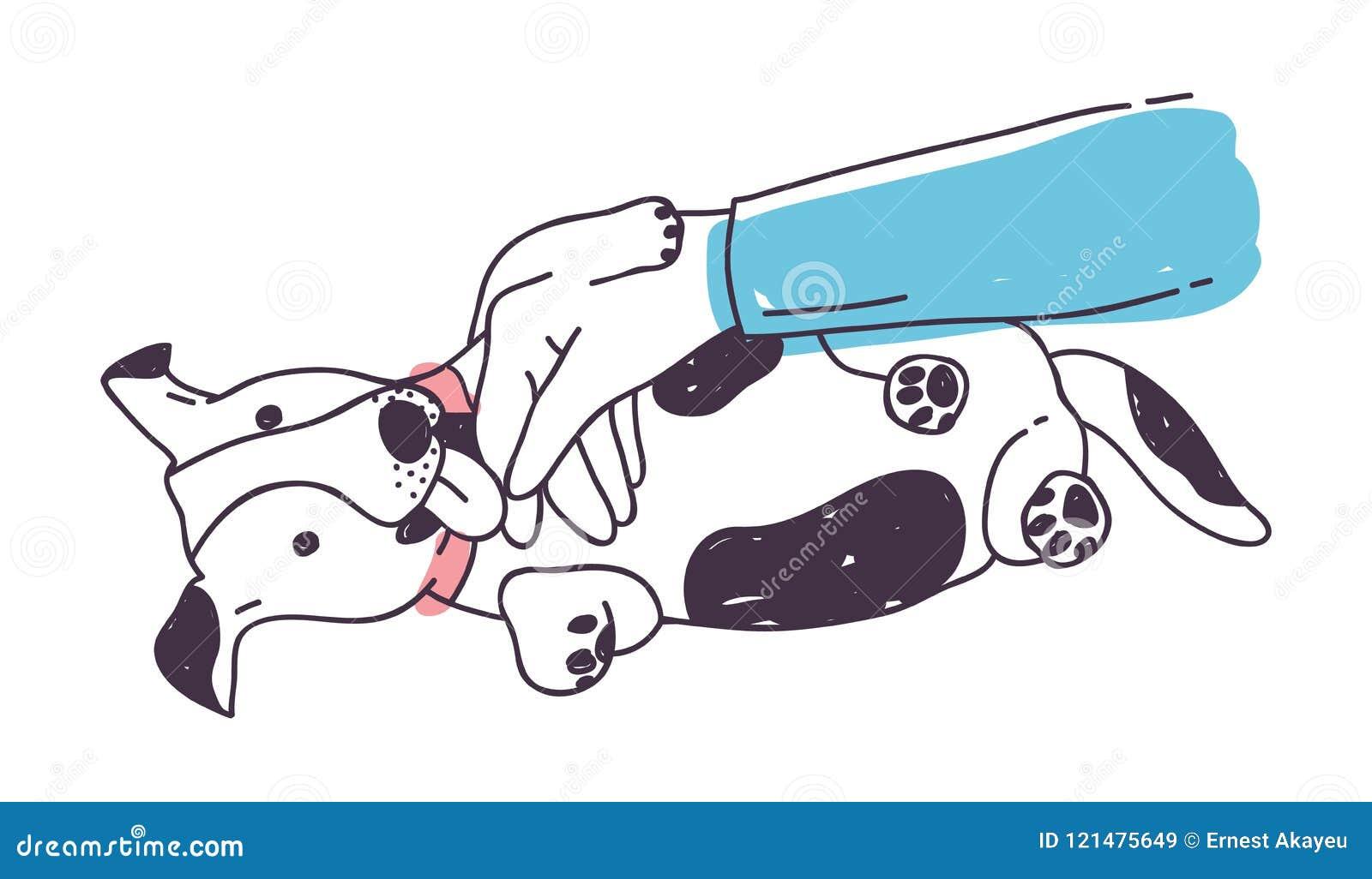 Cane sveglio che gioca con la mano del ` s del proprietario e che lo lecca Cucciolo allegro divertente o menzogne canina sul pavi
