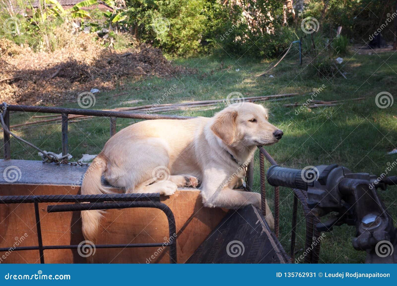 Cane sveglio su un motociclo del sidecar