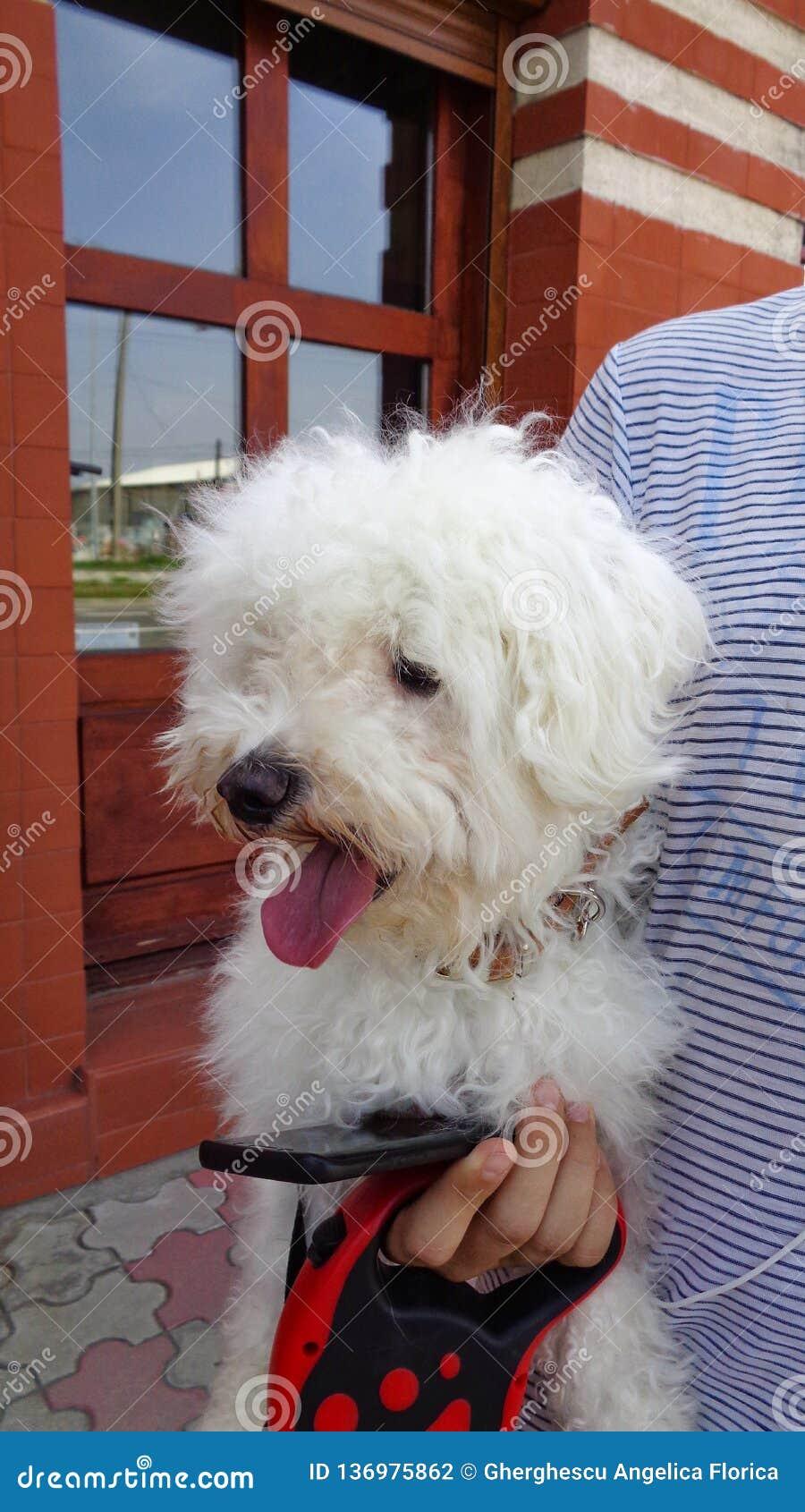 Cane, tenuto nelle armi da un giovane