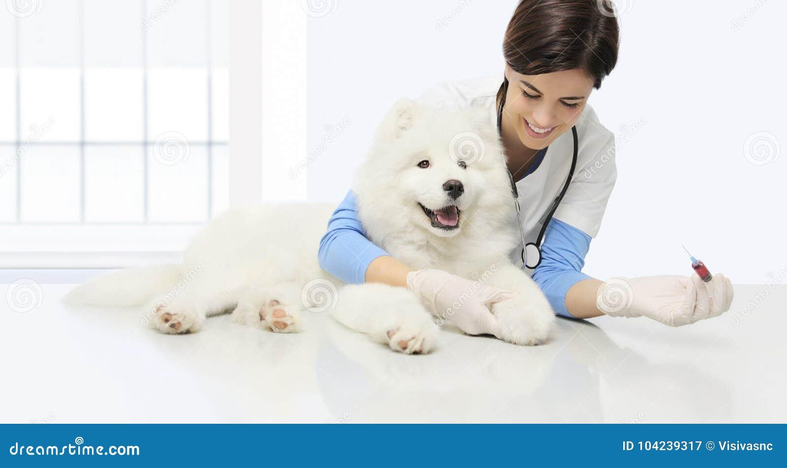 Cane veterinario dell esame, analisi del sangue, spirito veterinario sorridente