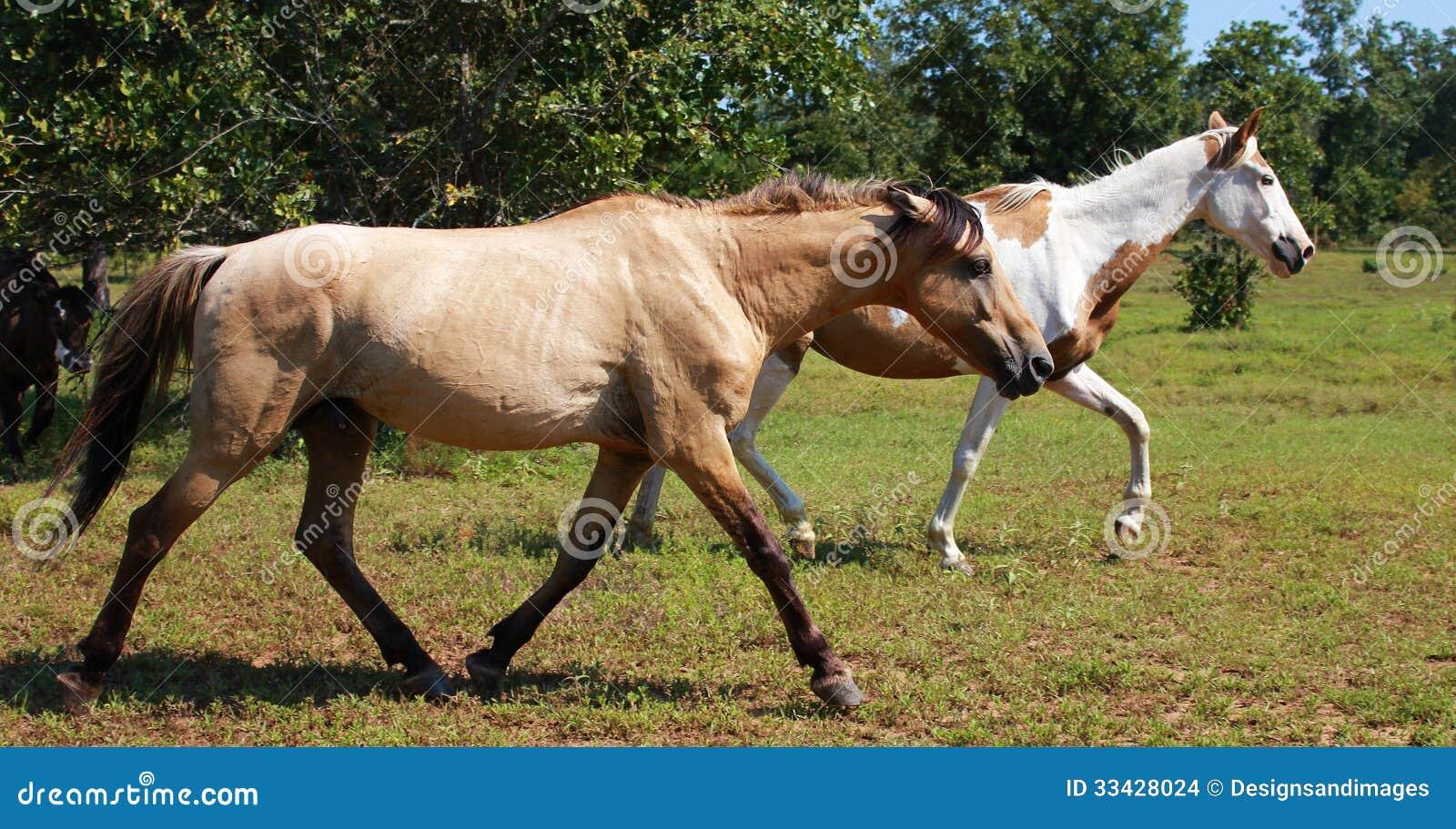 Mustangs blackjack mountain oklahoma