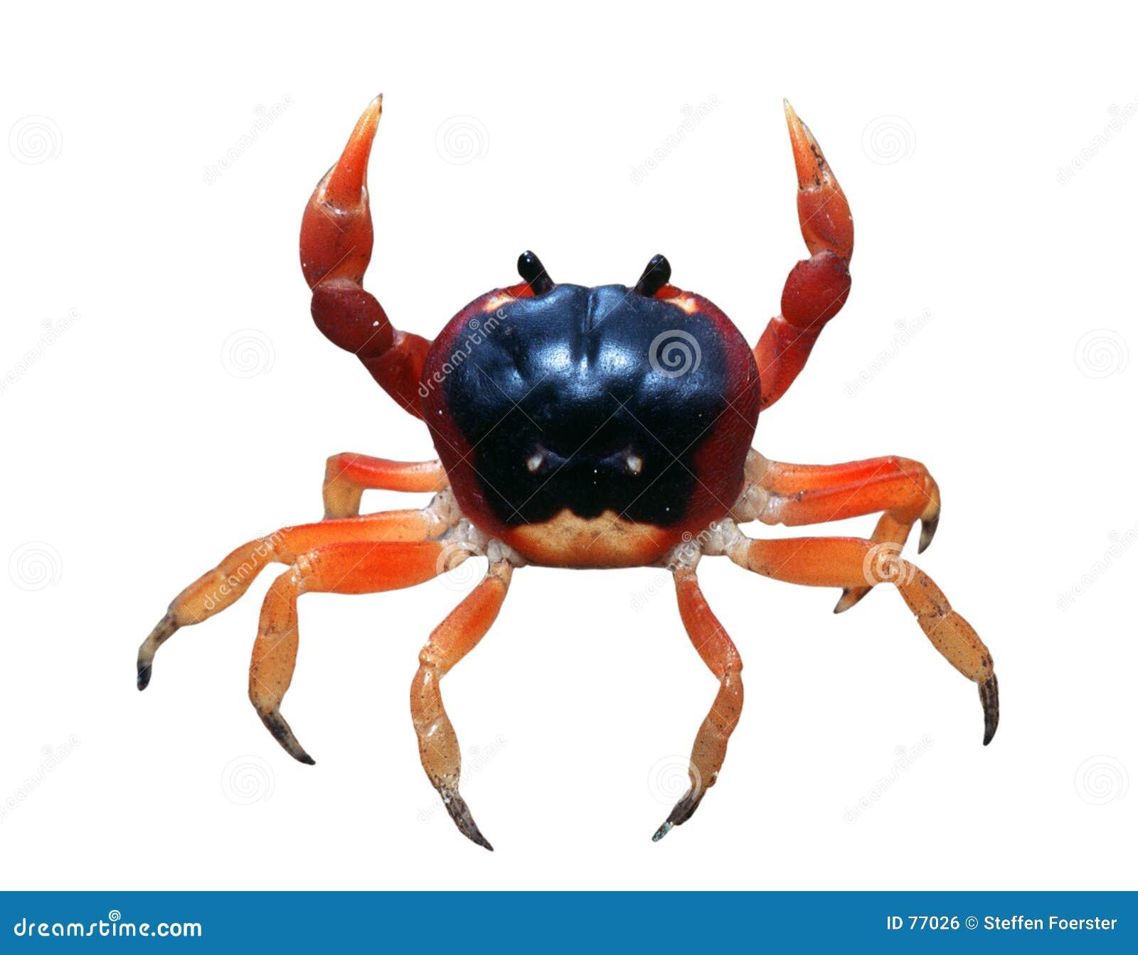 Cangrejo rojo