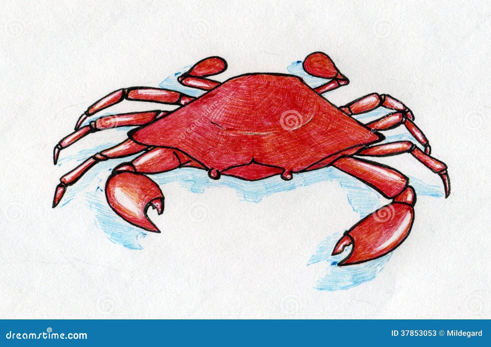 Cangrejo Rojo Con La Sombra Azul Stock de ilustración - Ilustración ...