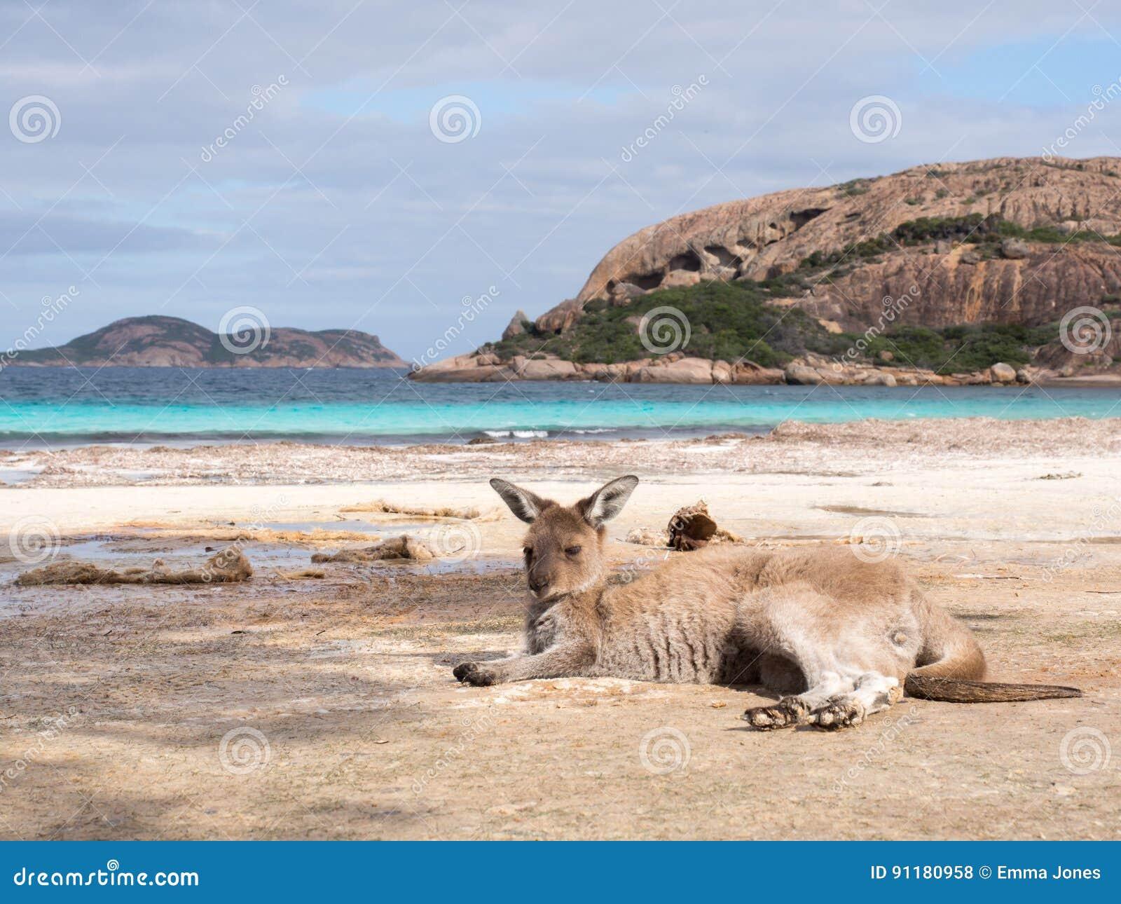 Canguru, Lucky Bay, Austrália Ocidental