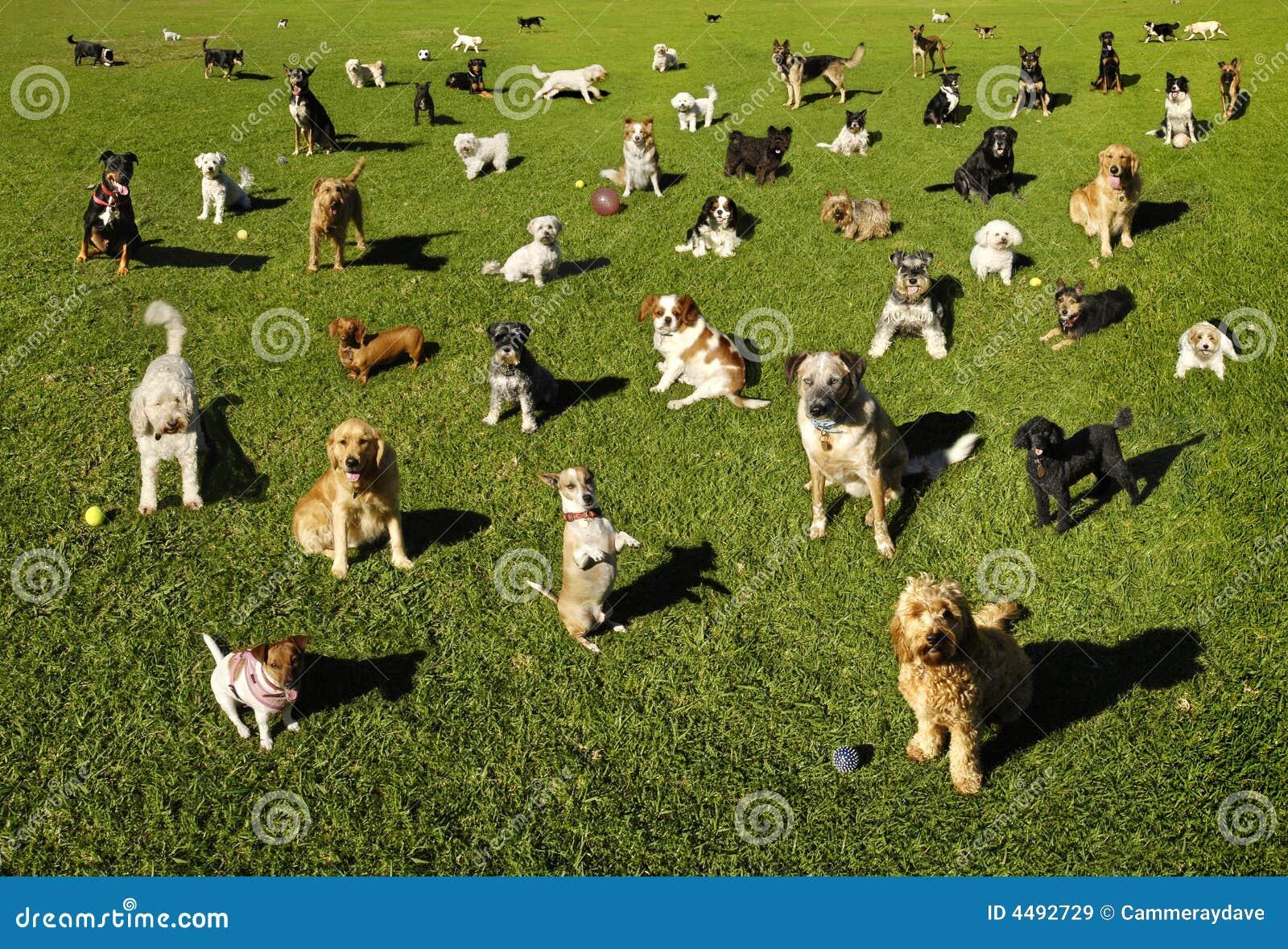 Cani alla sosta