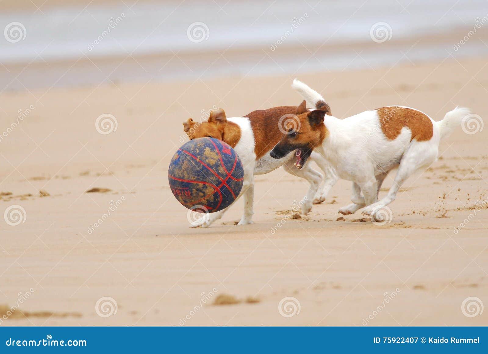 Cani che inseguono una sfera