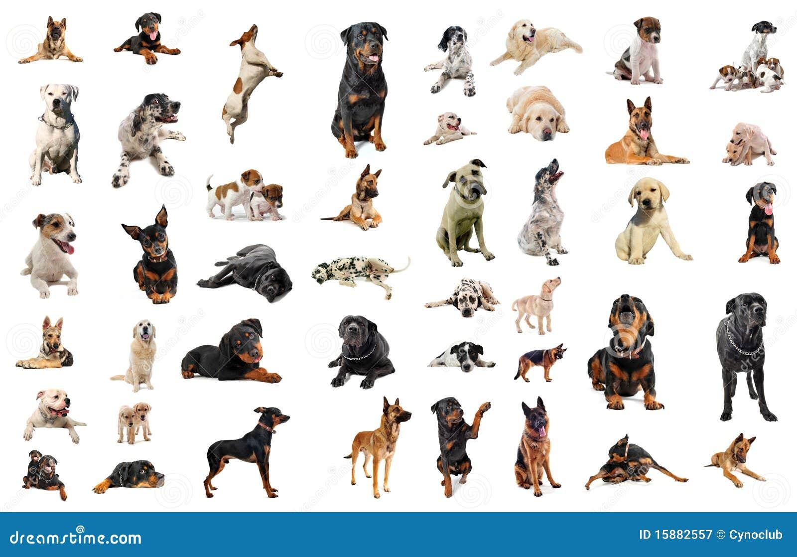 Cani Da Guardia Fotografia Stock Libera da Diritti Immagine: 15882557