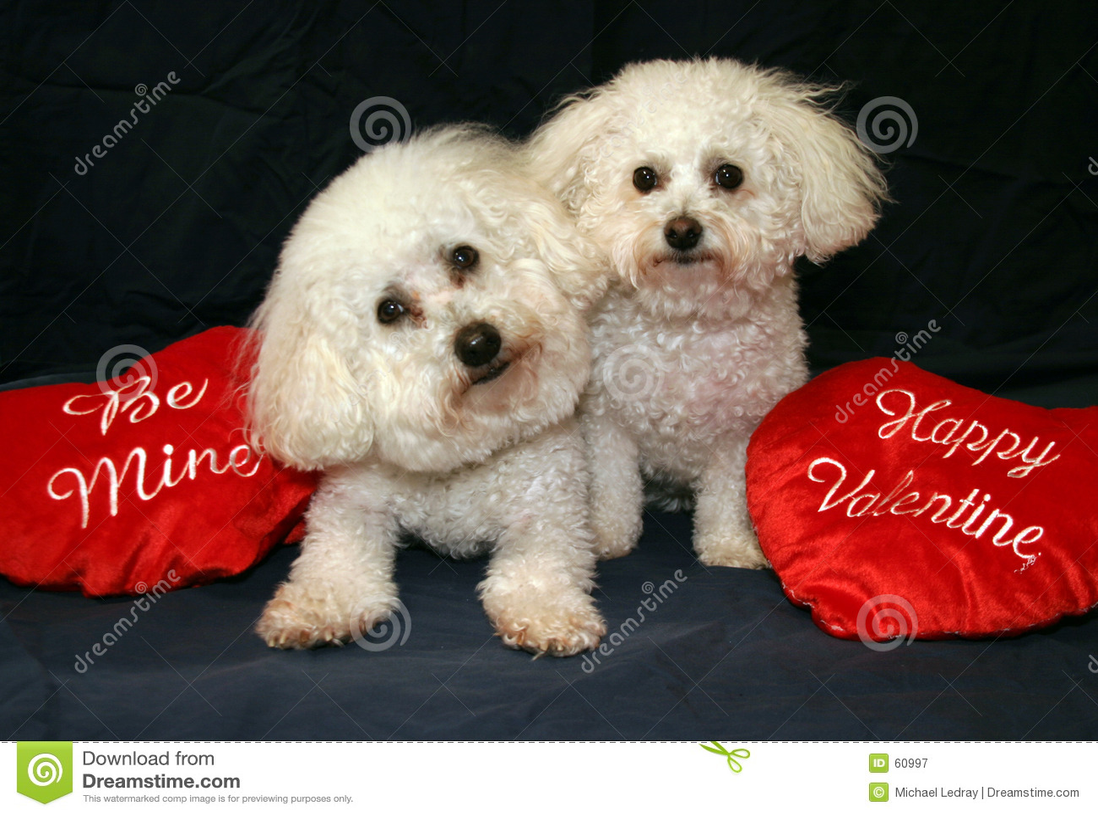 Cani del biglietto di S. Valentino