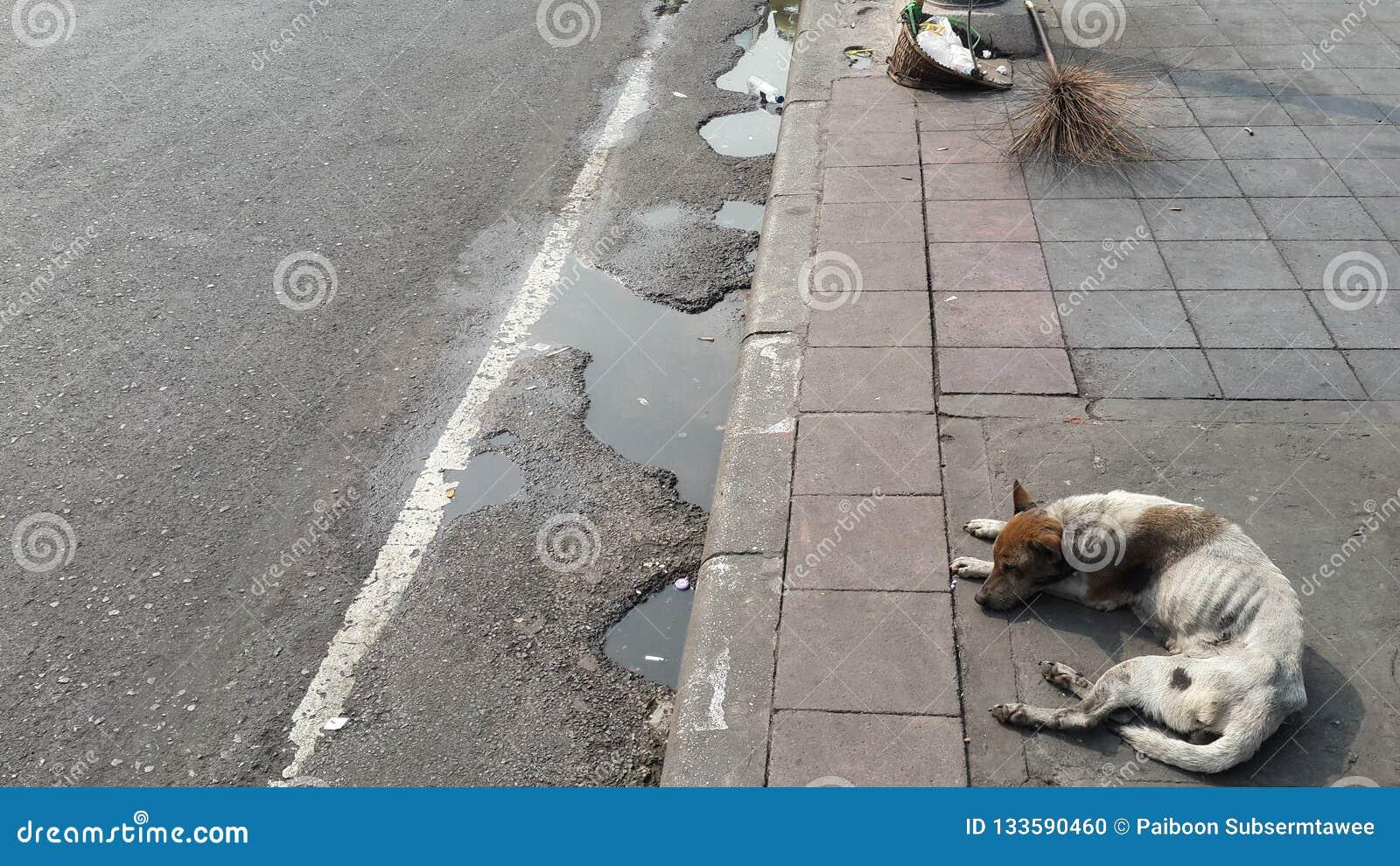 Cani della via