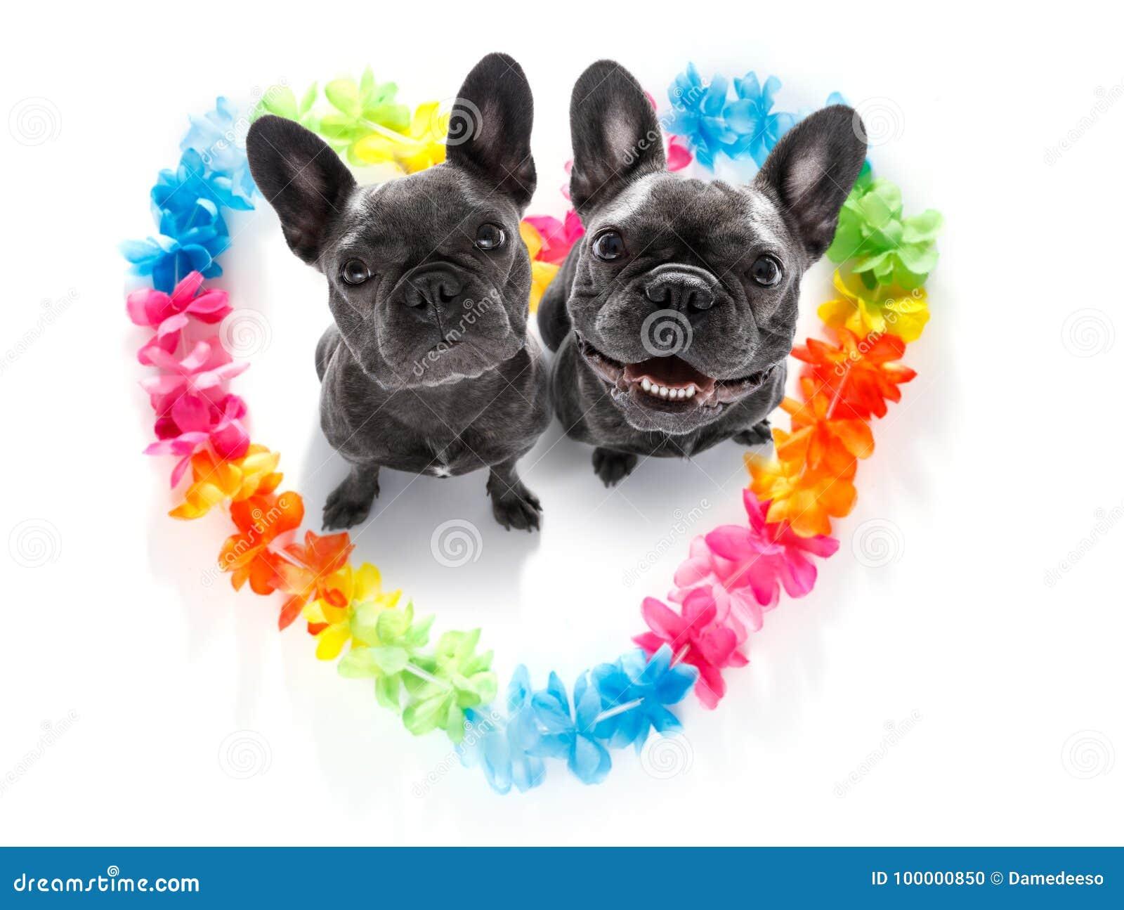 Cani felici dei biglietti di S. Valentino