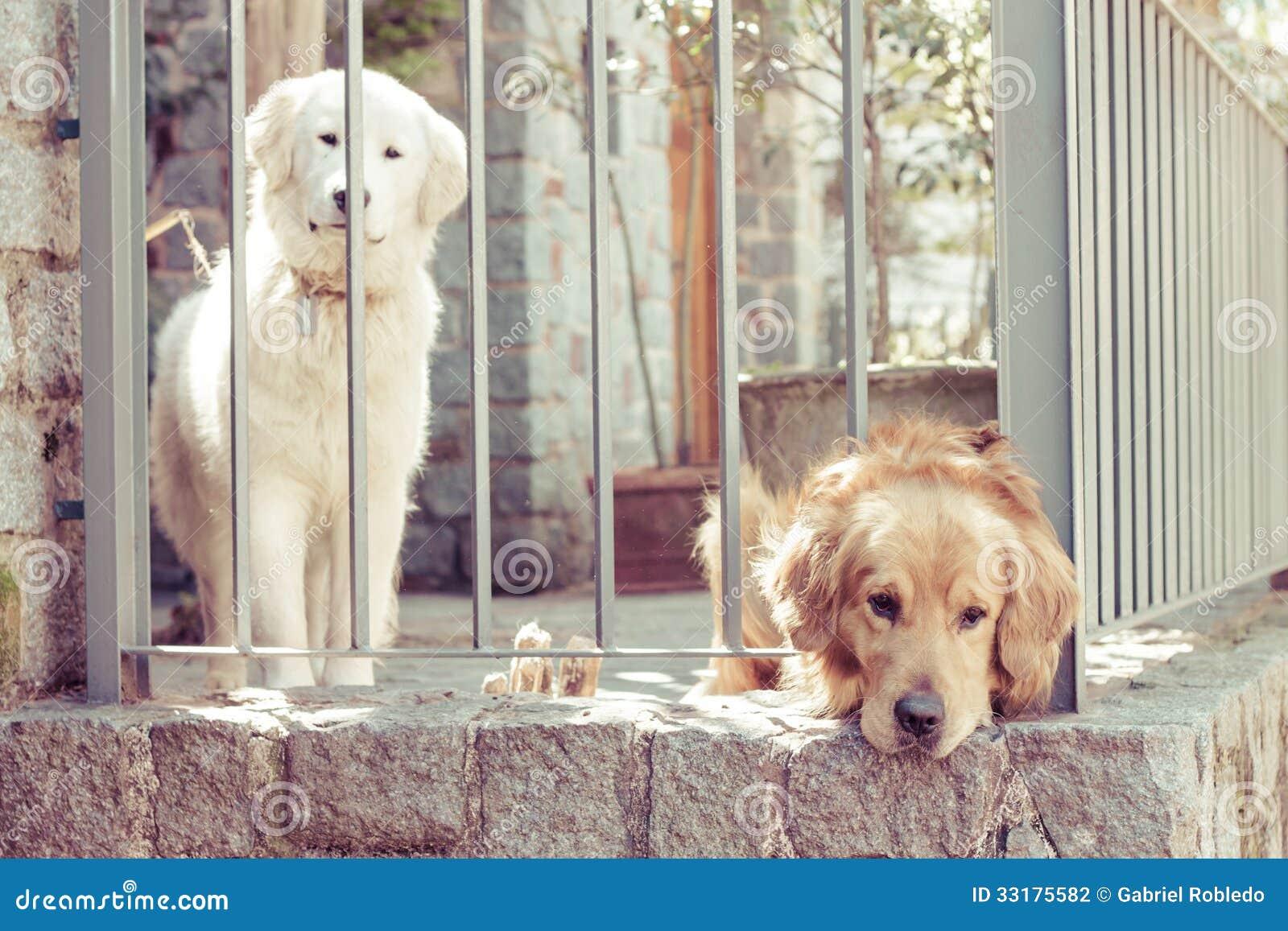 Cani soli