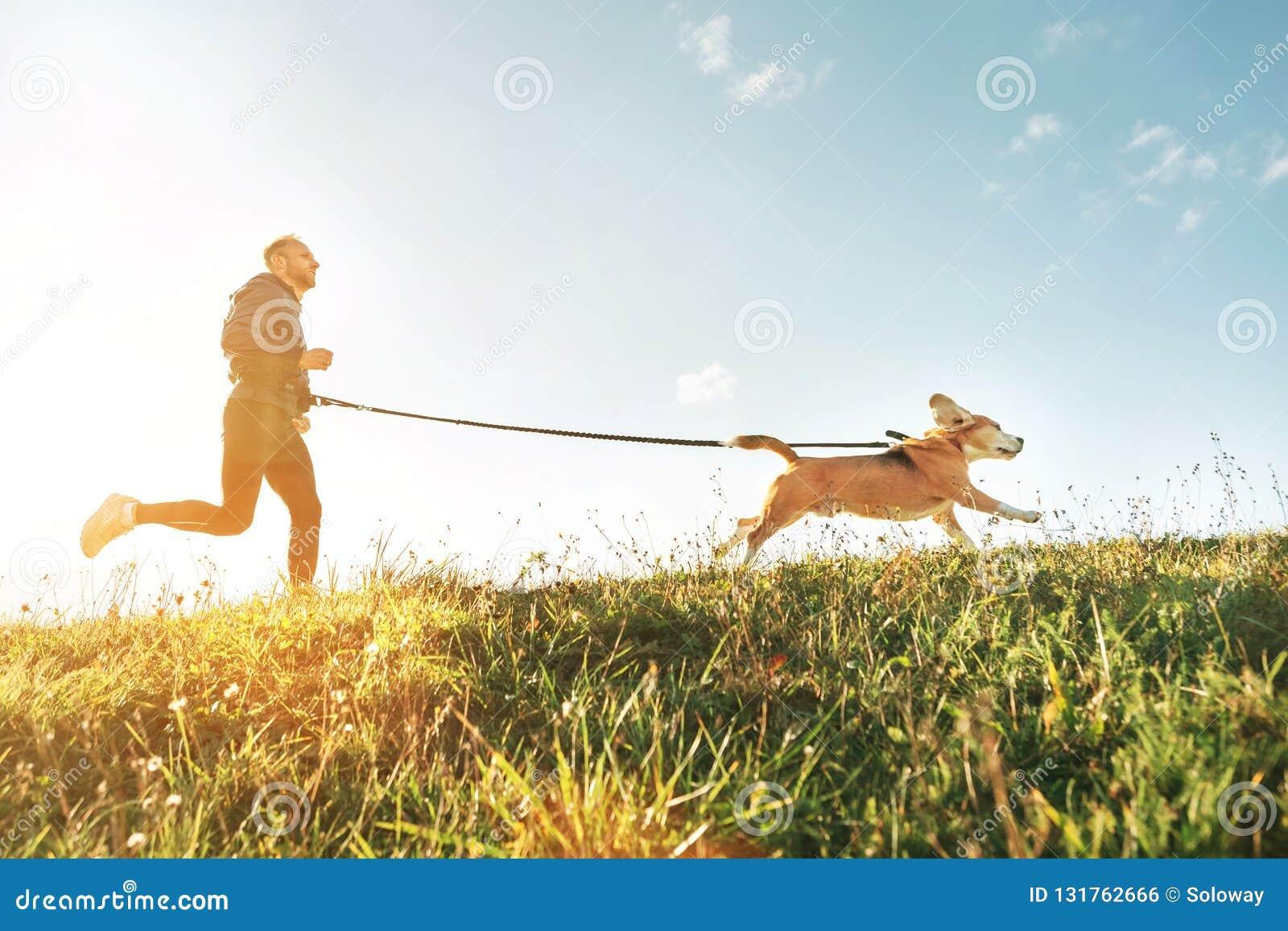 Canicross övningar Mankörningar med hans beaglehund Aktivitet för utomhus- sport med husdjuret