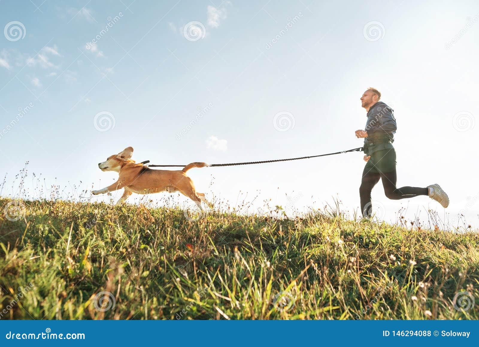 Canicross ?vningar Mank?rningar med hans beaglehund Aktivitet f?r utomhus- sport med husdjuret
