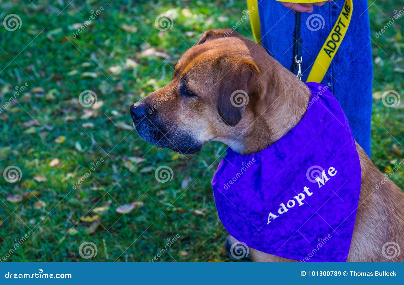 Canine с принимает меня шарф