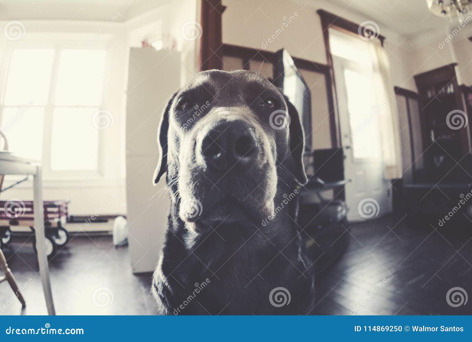 Canine déprimée