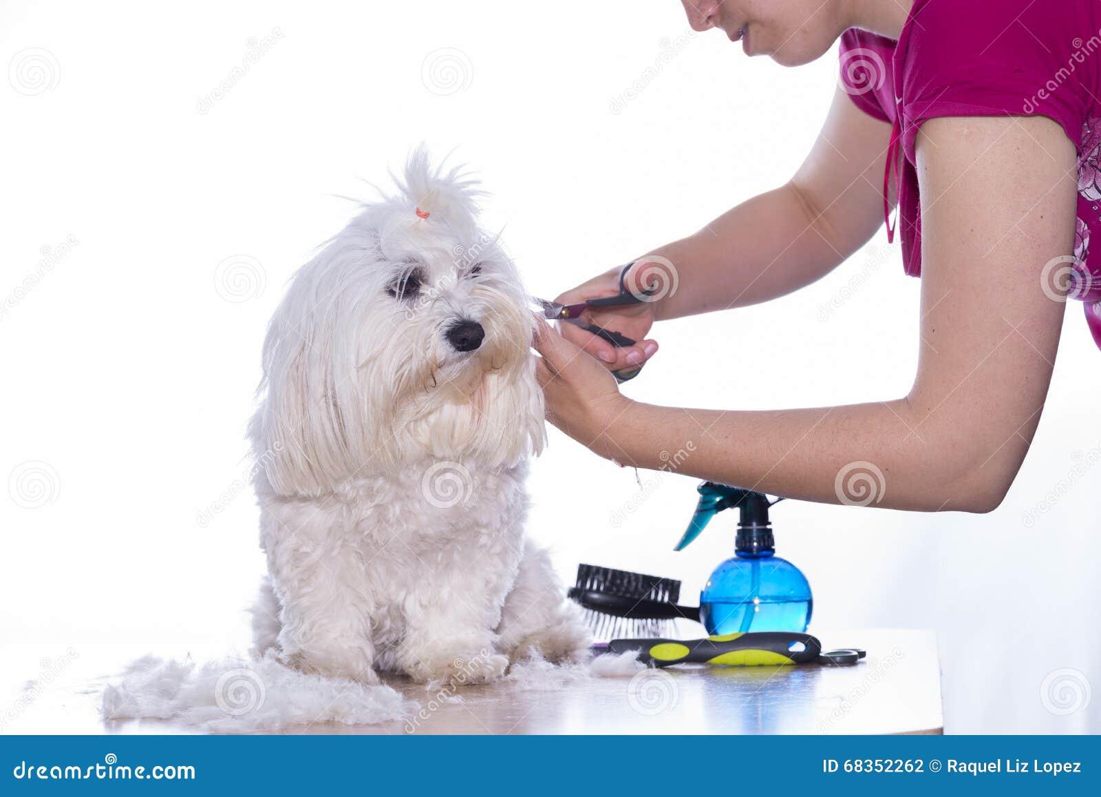 Canine hair cut.