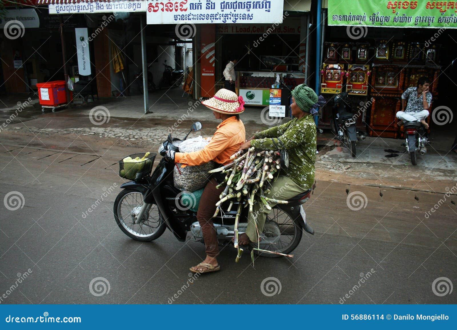 Canna da zucchero Cambogia