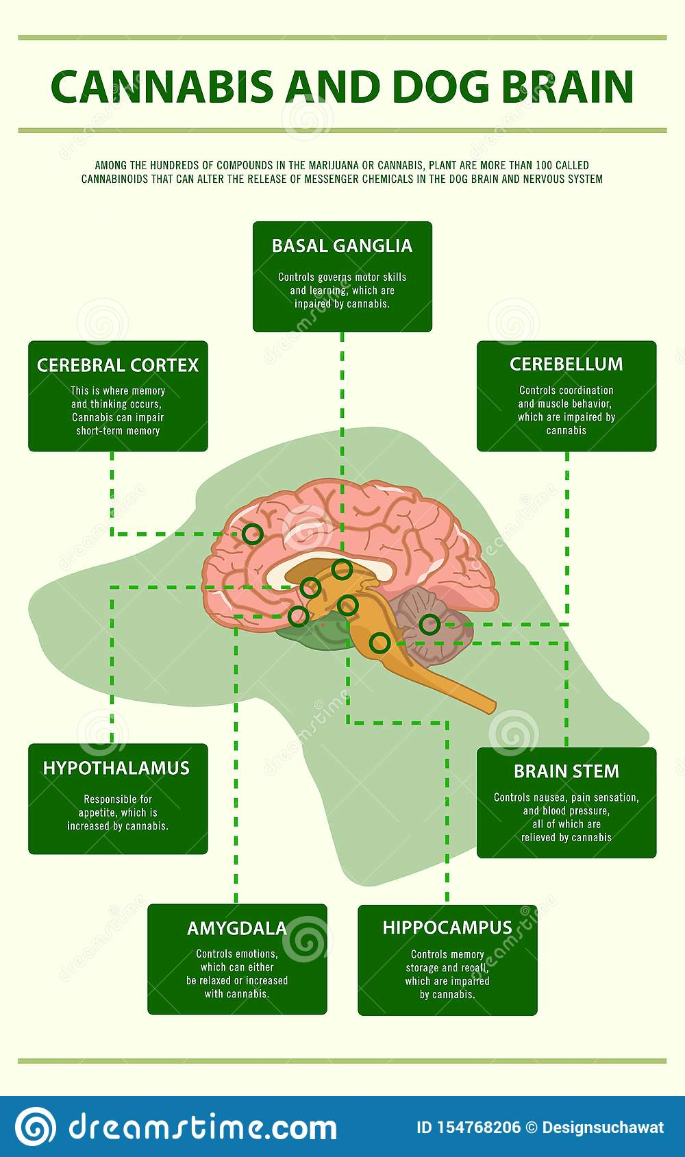 Cannabis and dog brain vertical infographic