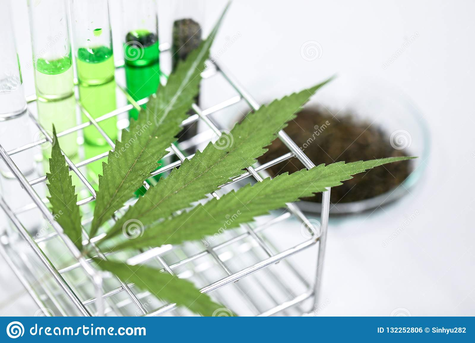 Cannabis Drugs, Analysis of Cannabis in laboratory.