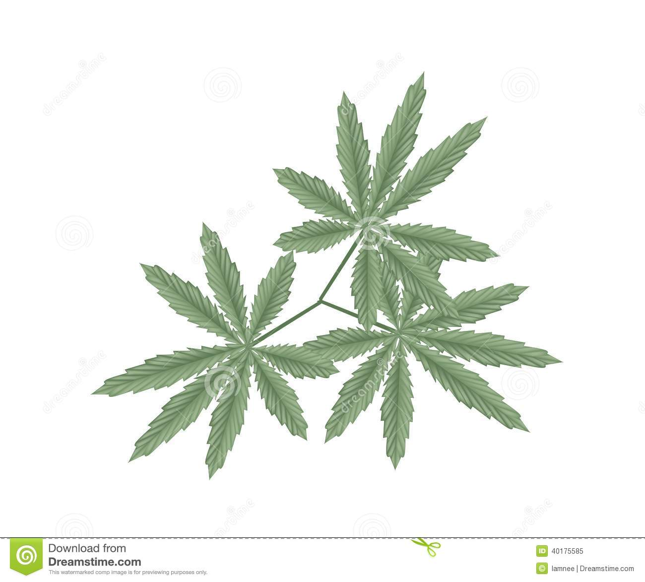 the background of the hemp and its uses Each type of fiber has its own uses in industry once cut, hemp must undergo a process known as retting background criminal record checks, and laboratory.