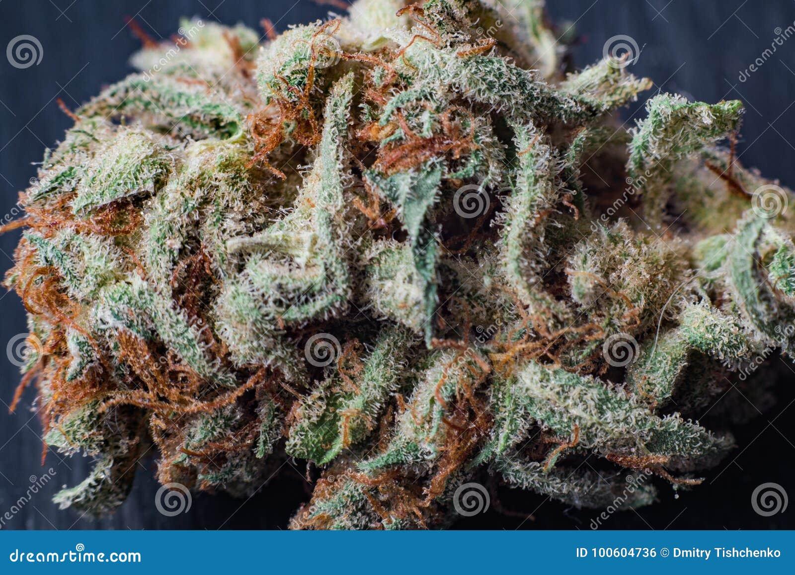 Marijuana, Cannabis Macro Trichomes Thc Flower Sativa Critical Never