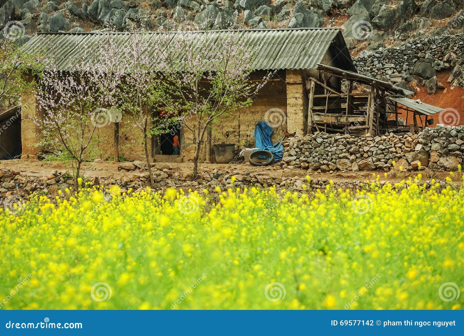 Canola śródpolny pobliski dom mniejszości etniczne