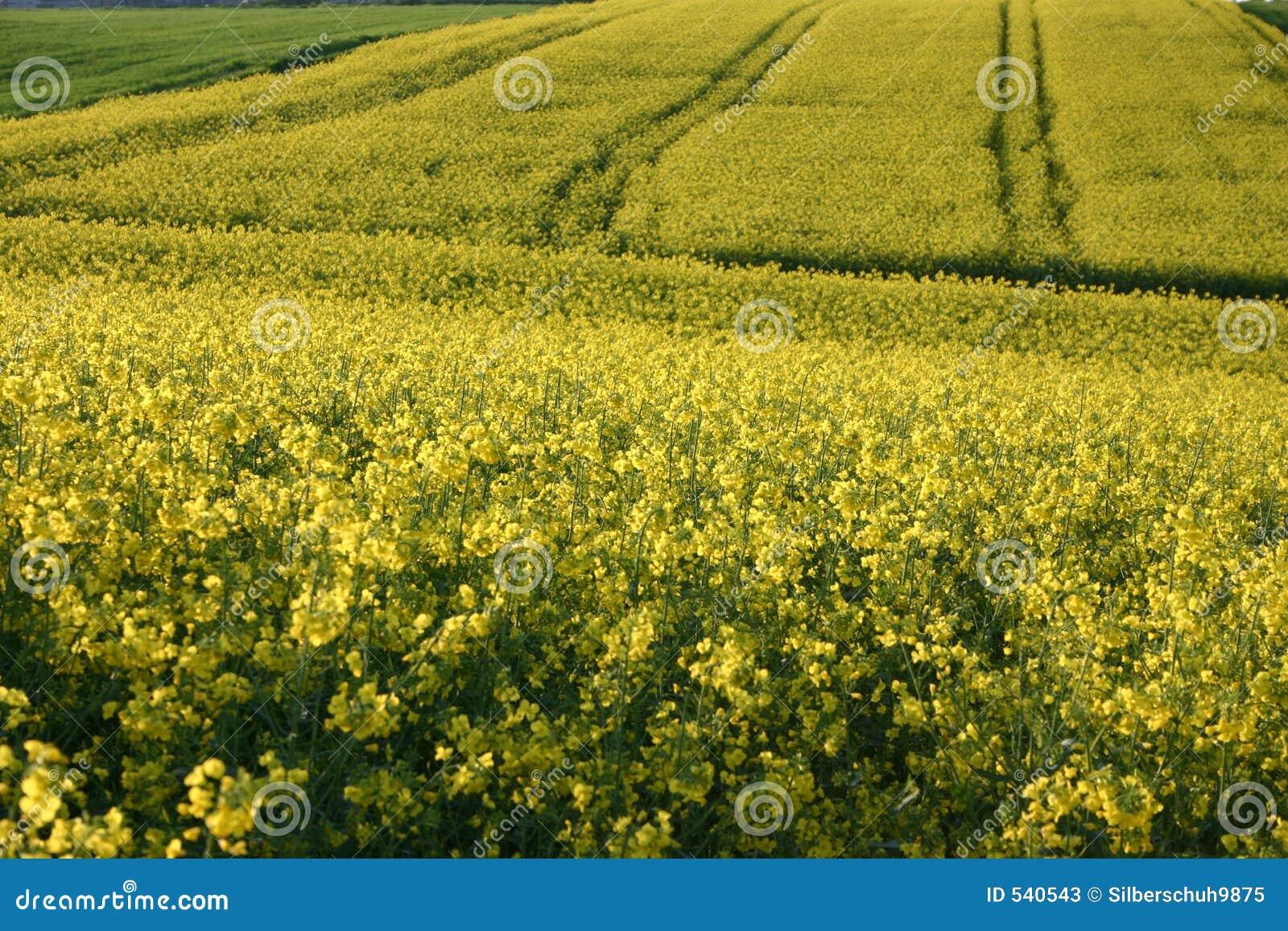 Download Canola域 库存图片. 图片 包括有 线路, 收获, 种田, 问题的, 模式, 乡下, 油菜籽, 国家(地区) - 540543