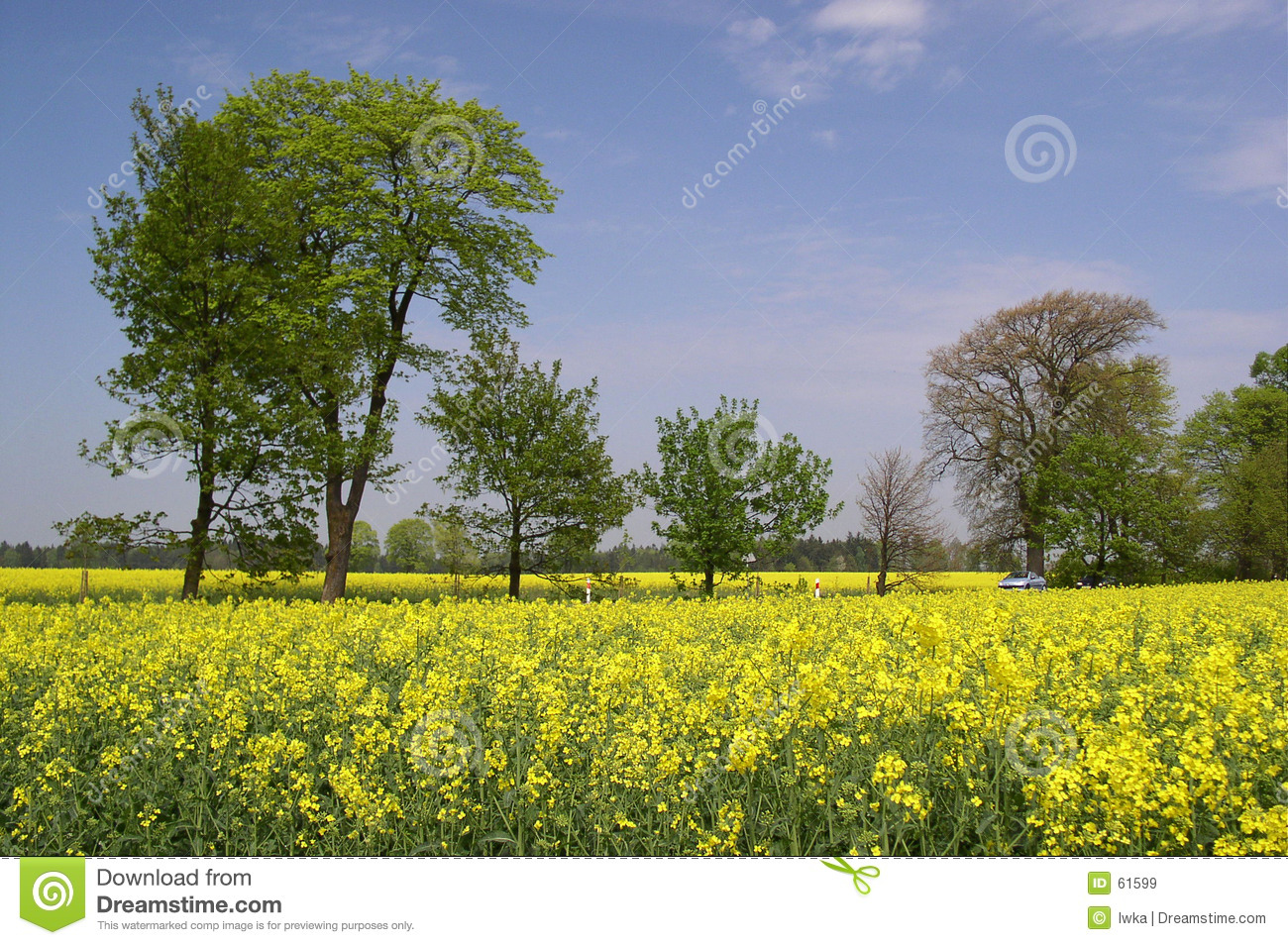 Download Canola image stock. Image du graine, fleurs, affermage, zone - 61599