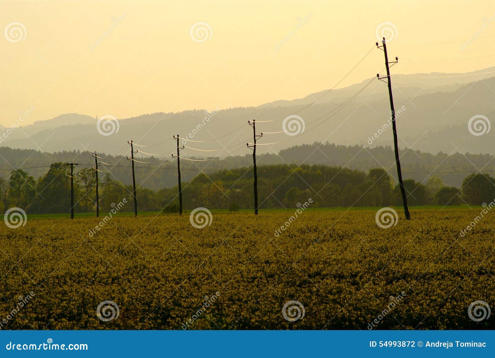 Canola-Feld-Sonnenuntergang